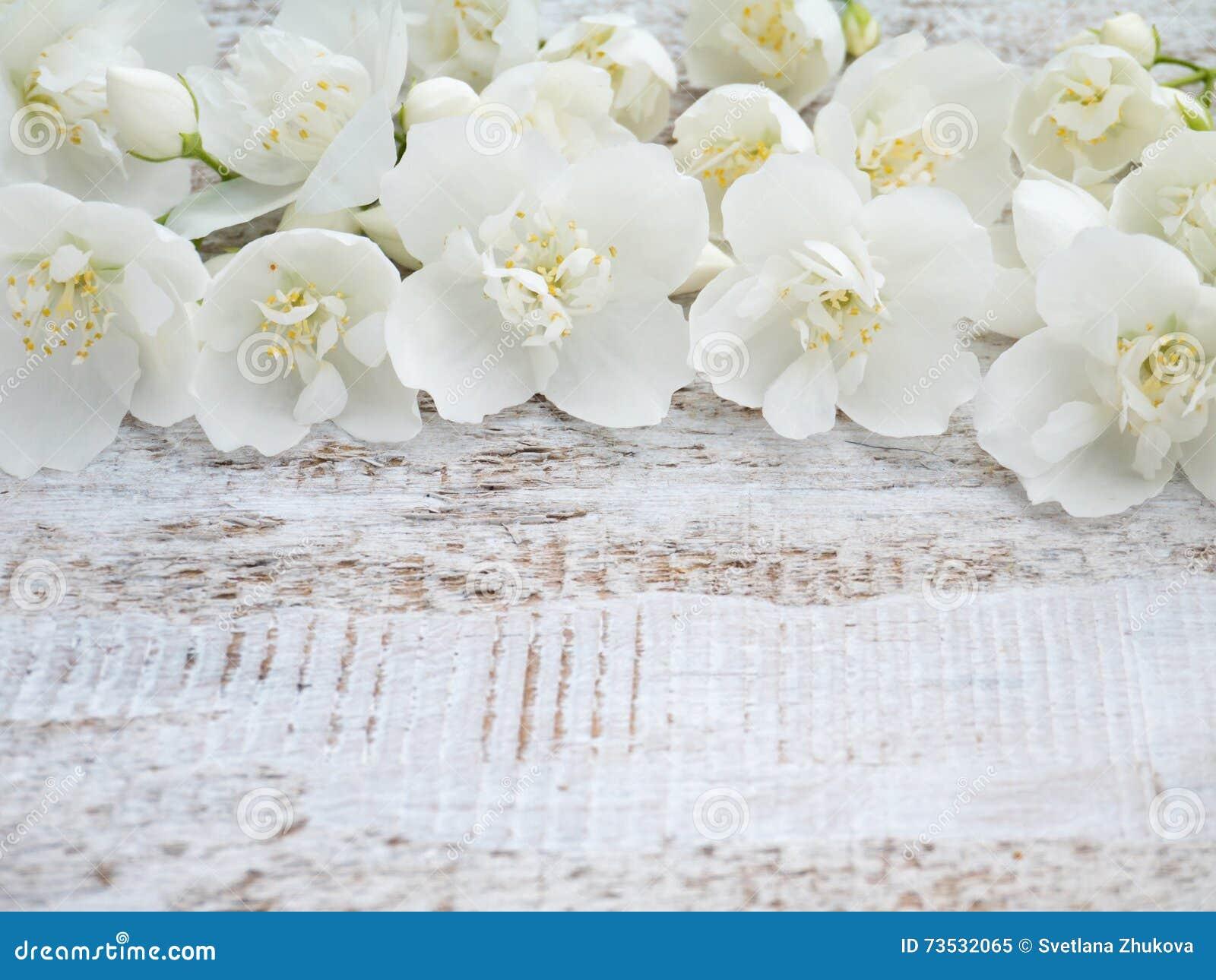 English dogwood flowers stock image. Image of plant, delicate - 73532065