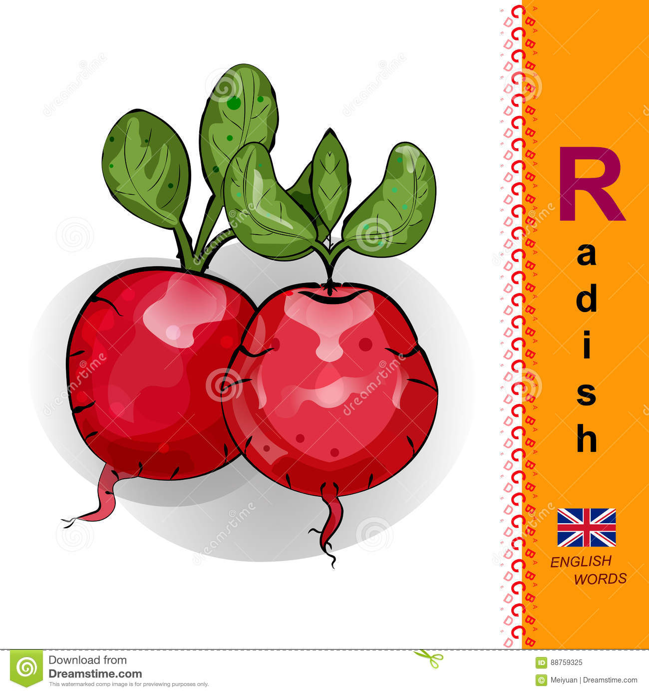 english letter r the illustration of two red radishes stock vector
