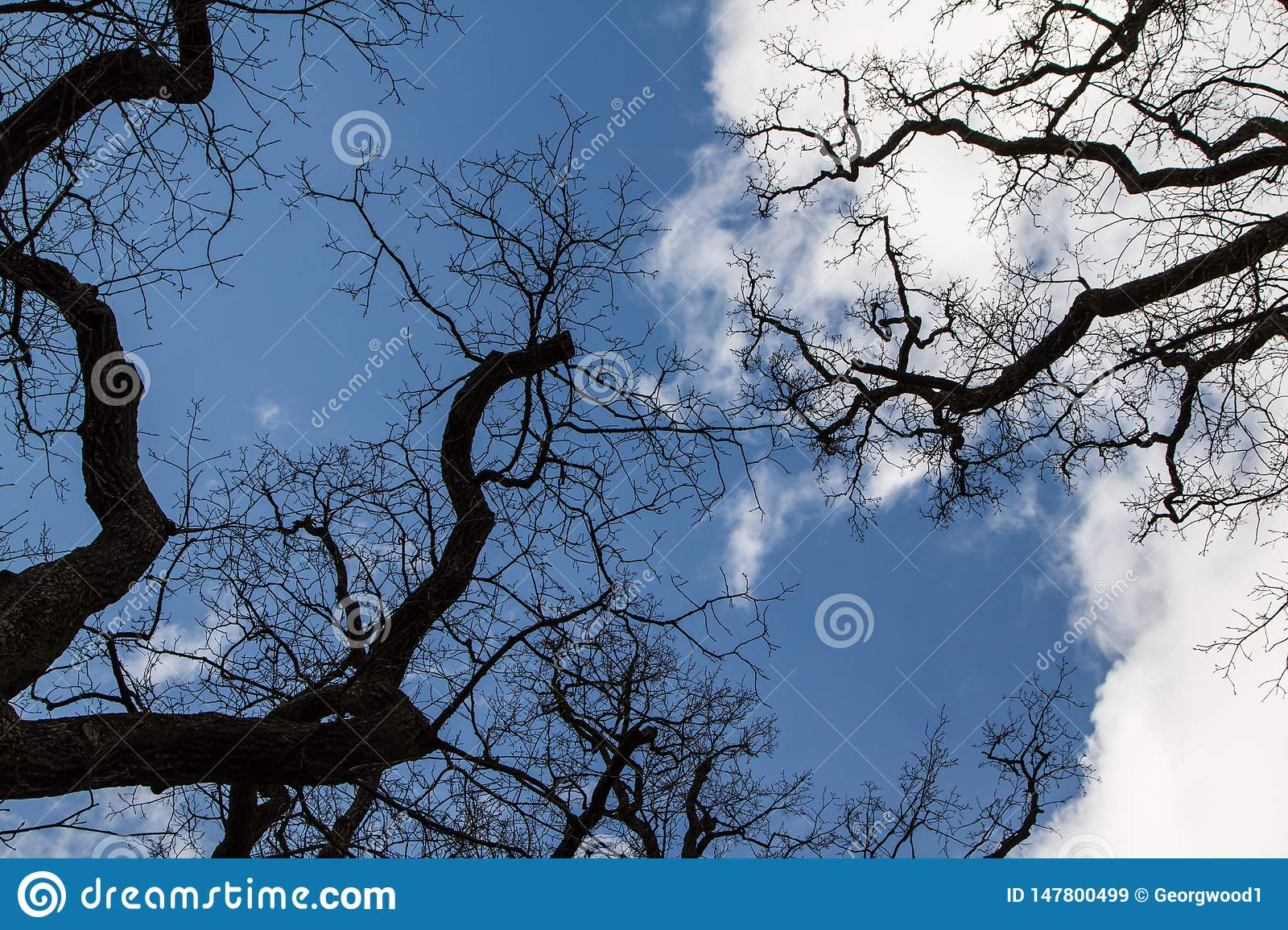 `This oak is only 300 years old. Spring, I will live on