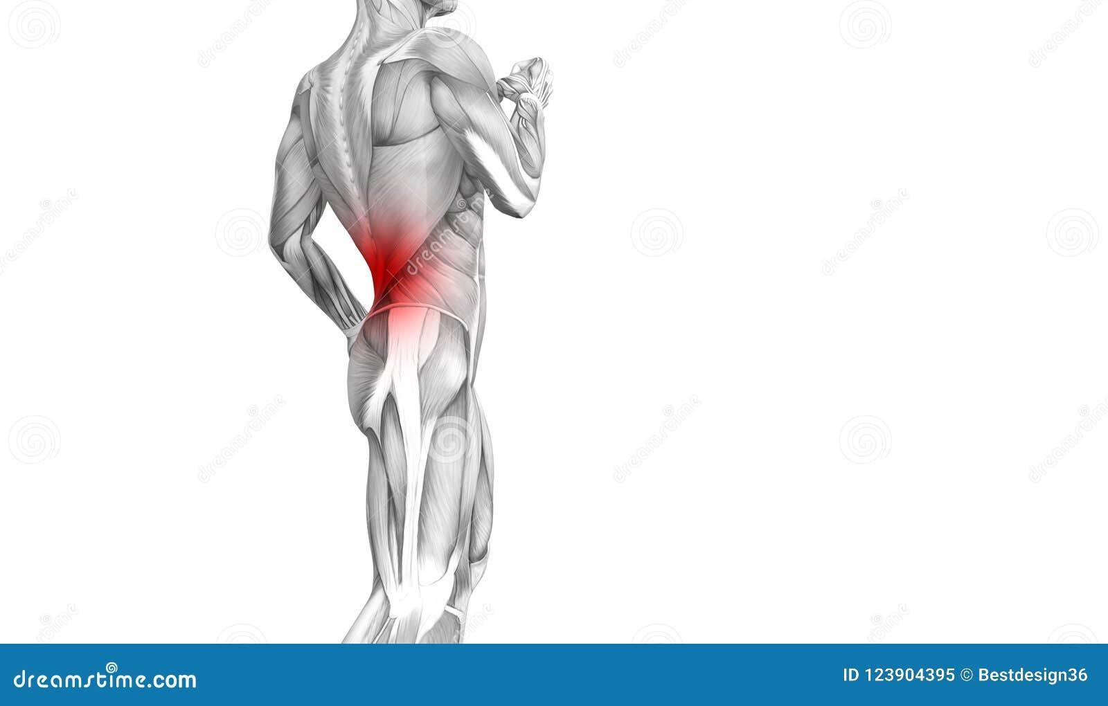 Engodo da terapia dos cuidados médicos da dor articular articulaa ou da espinha da inflamação humana traseira do hot spot da anat