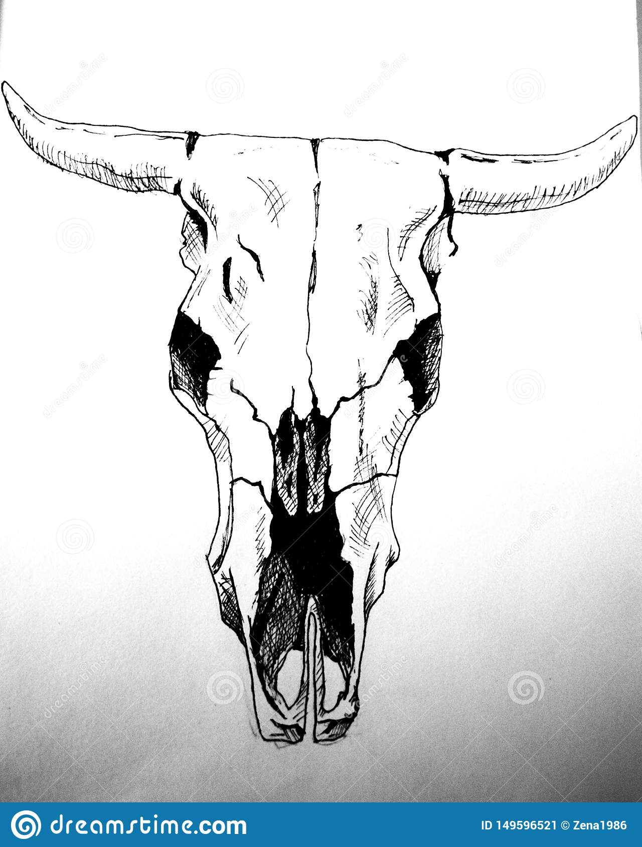 Engrave Cow Skull Hand Drawn Graphic Illustration Engrave
