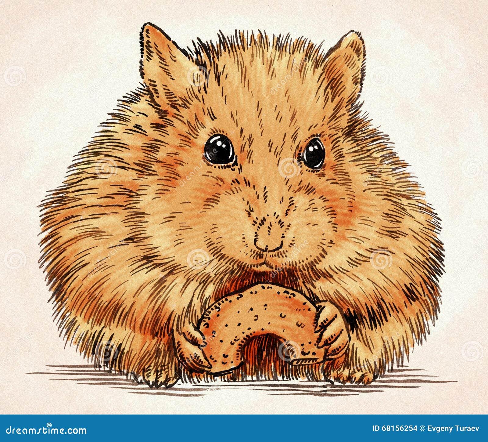 Engrave Ink Draw Hamster Illustration Stock Illustration ...