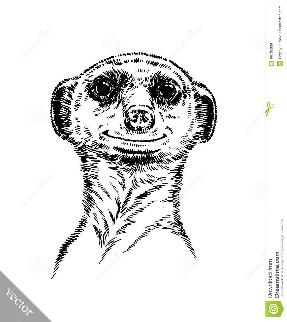 Engrave Ink Draw Meerkat Illustration Stock Vector Image