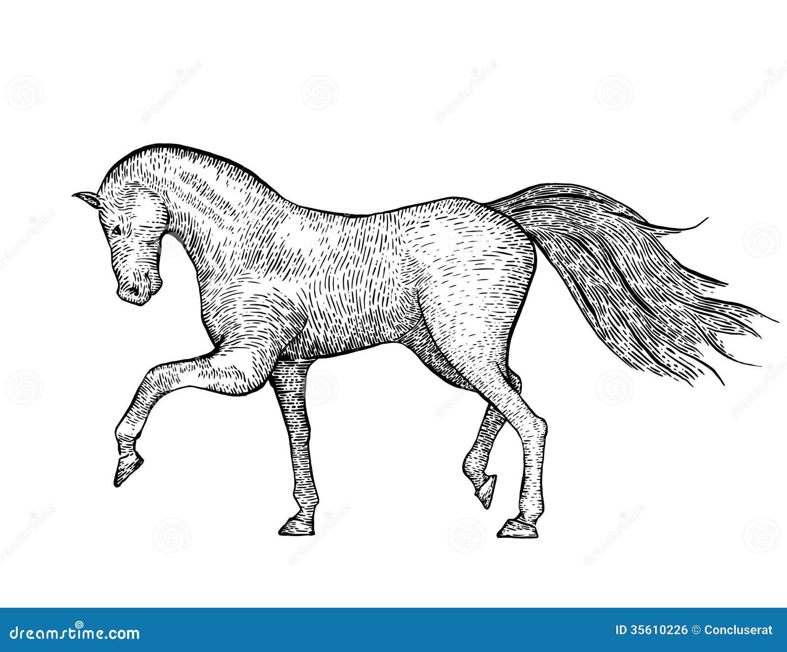 Engraved Vintage Horse Stock Vector Illustration Of