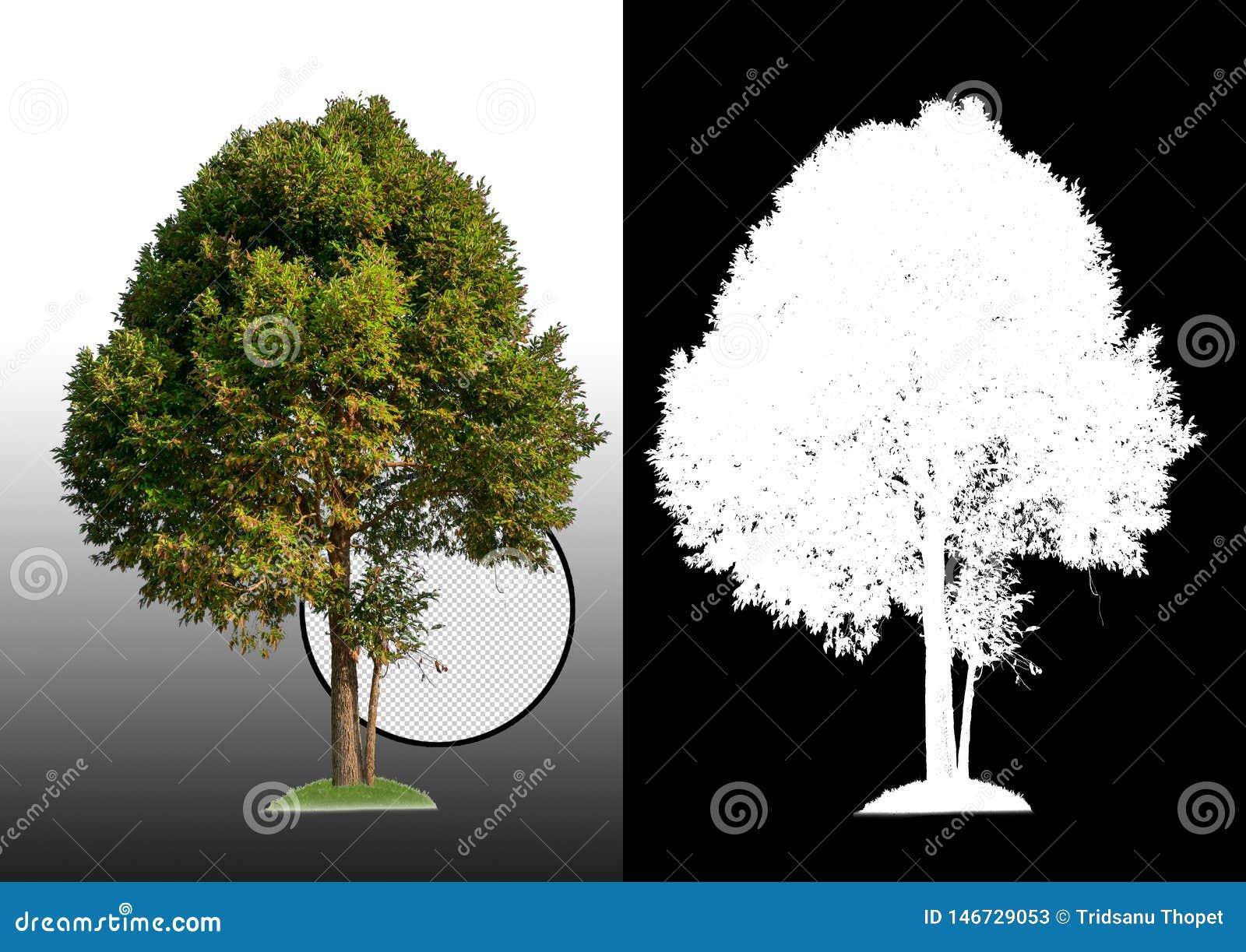 Enige boom met het knippen van weg