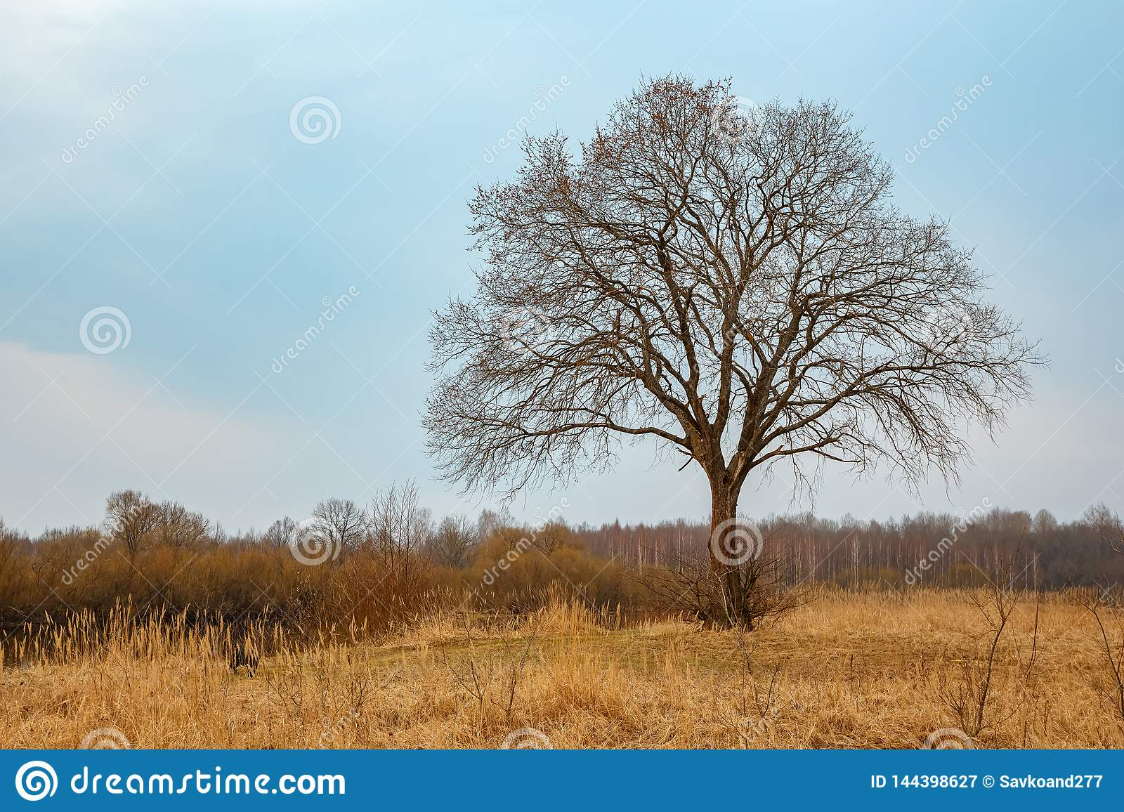 Enige grote boom zonder bladeren