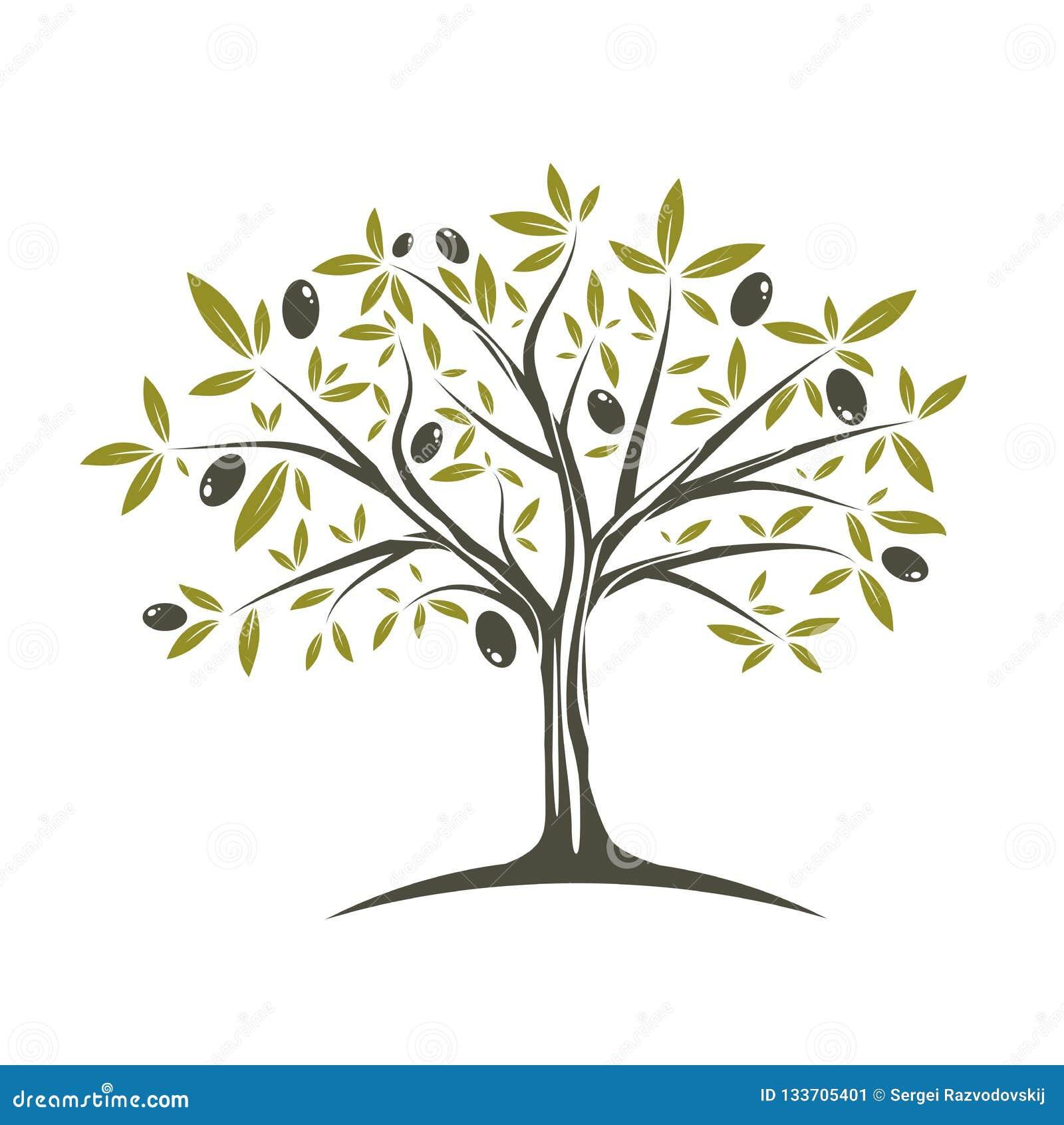 Enige olijfboom