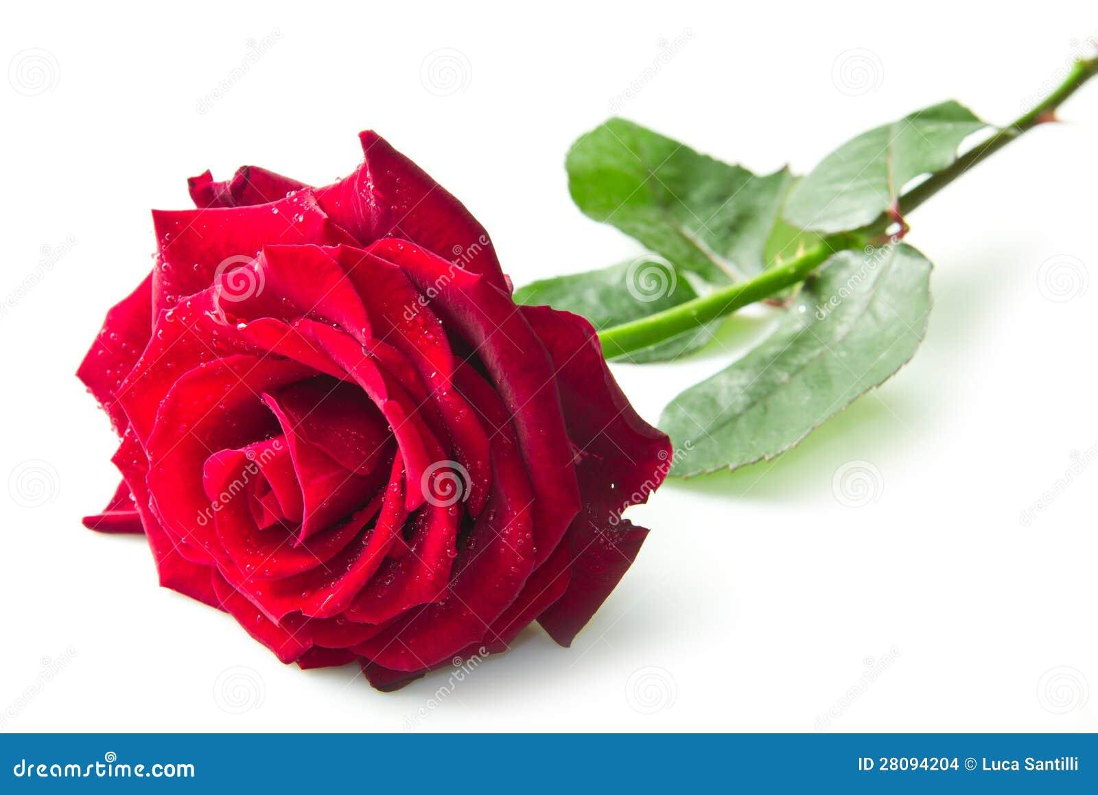 Enige rood nam bloem toe