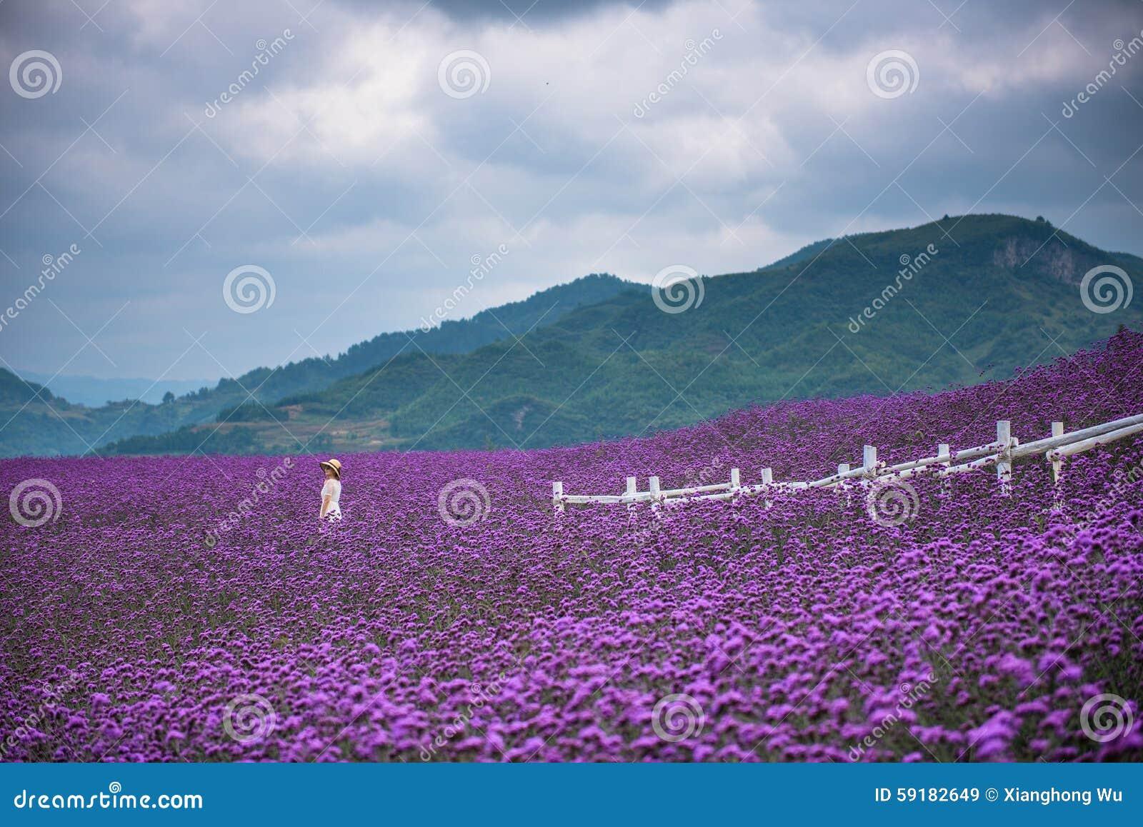 Enige vrouw op groot lavendelgebied