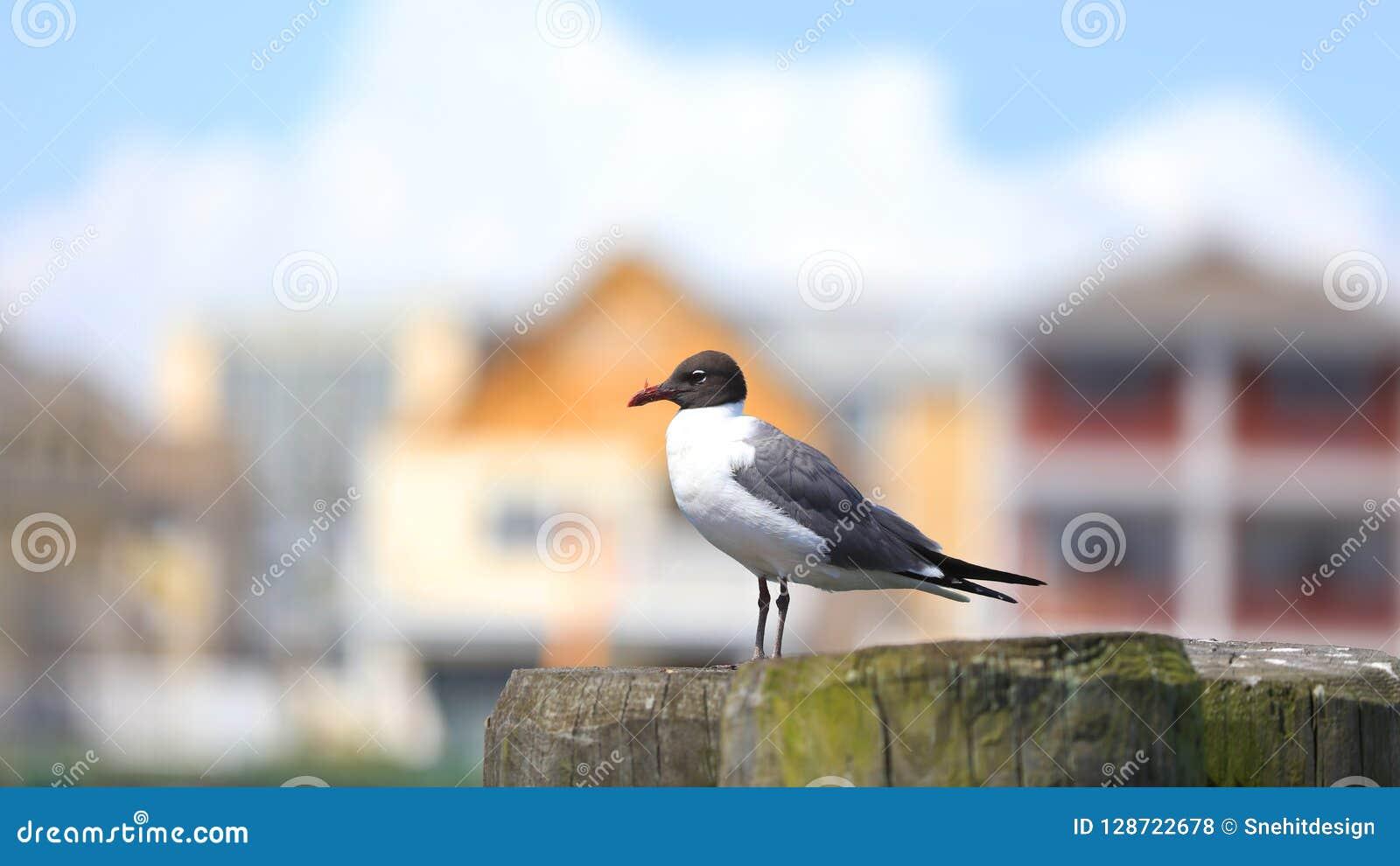 Enkel stormfågelfågel på stolpen