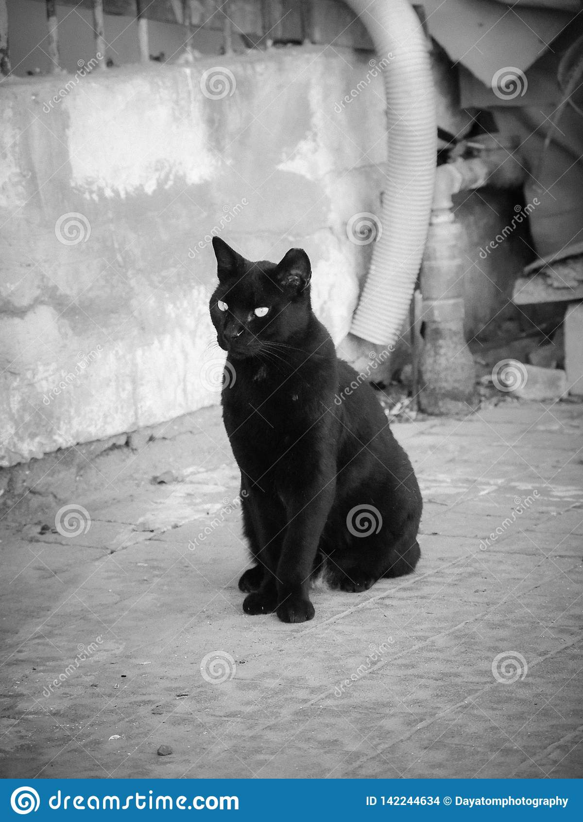 Enkel svart behagfull katt som utomhus står på trottoar