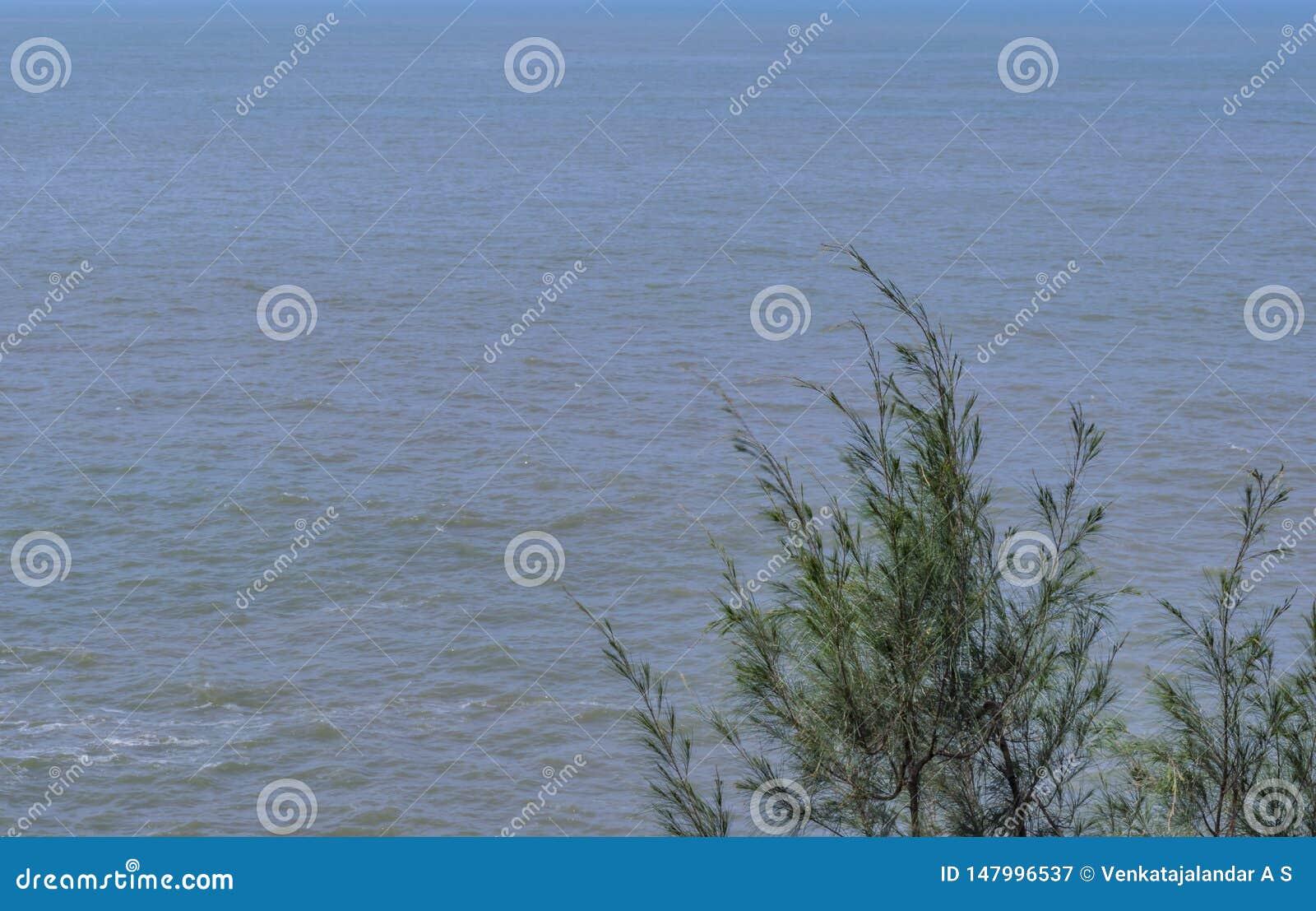 Enkelt tr?d - p? en havbakgrund