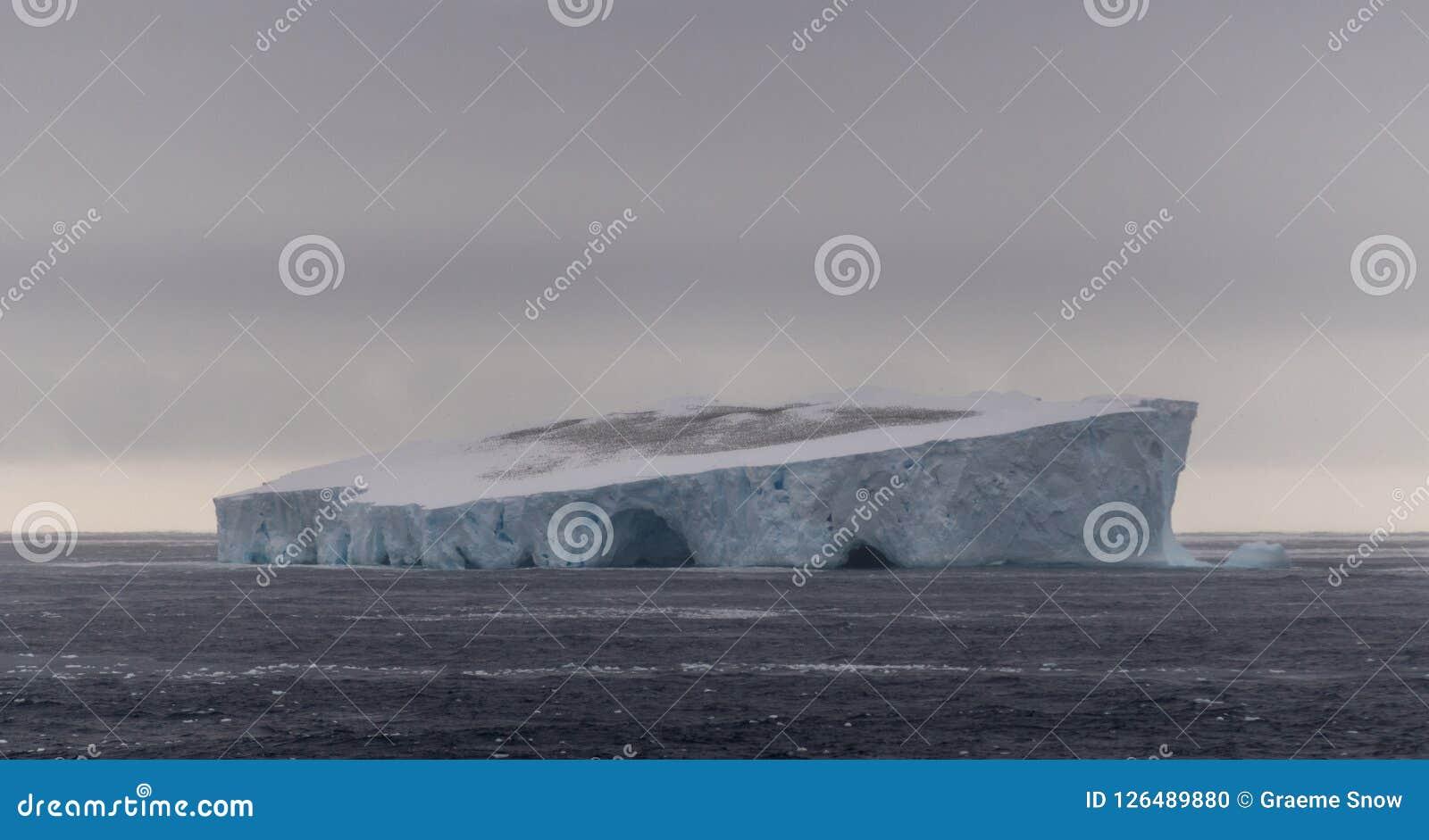 Enorm flock av antarktiska stormfåglar överst av isberget i tabellform, sydligt hav, Antarktis