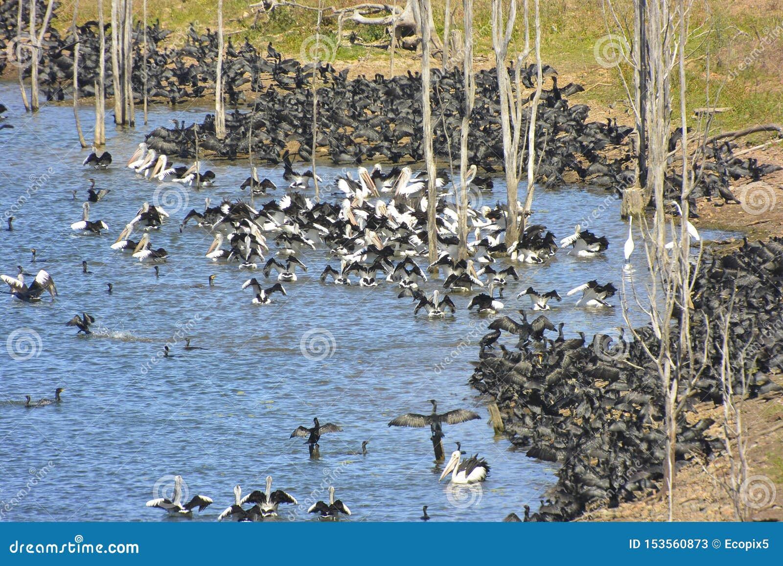 Enorm sammanhopning av att flockas waterbirds
