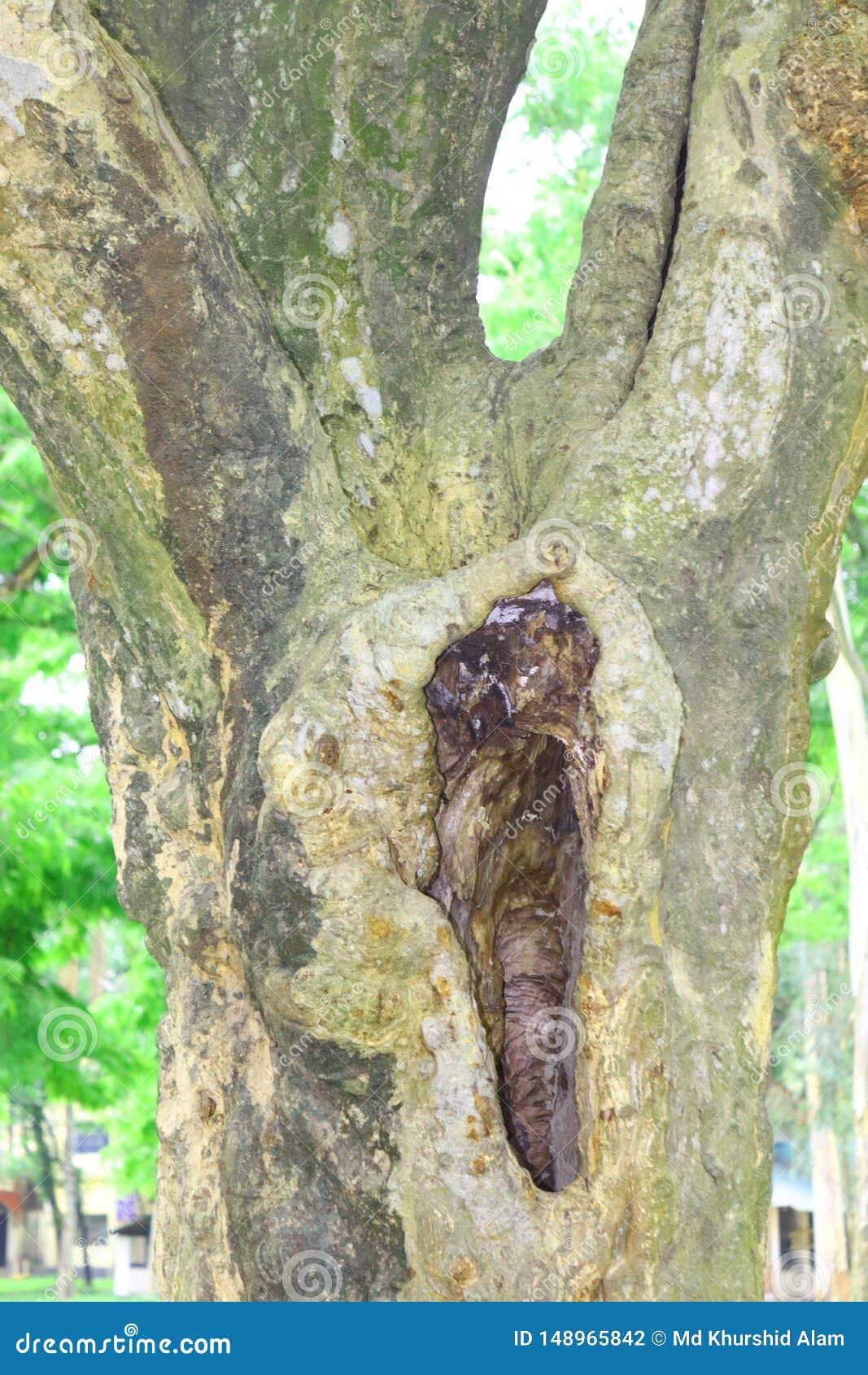 Enorma tr?dstammar i f?rdjupning det stora tr?det rotar, och solstr?len i en gr?n forestSpring ?ng rotar av ett stort tr?d med ny