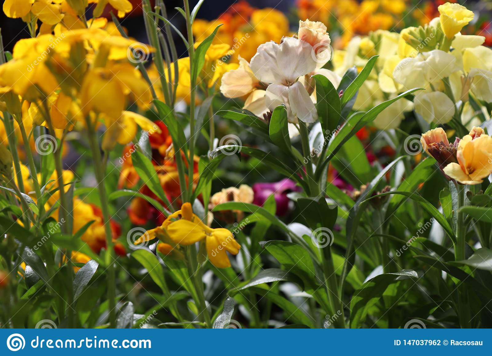 Enorme kleurrijke inzameling van bloemen