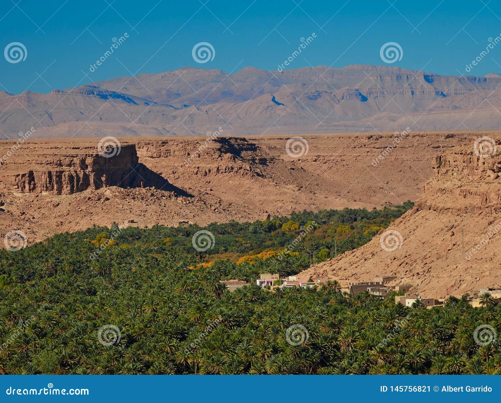 Enorme Palmenwaldung in Ziz-Tal, Marokko Schattenbild des kauernden Gesch?ftsmannes