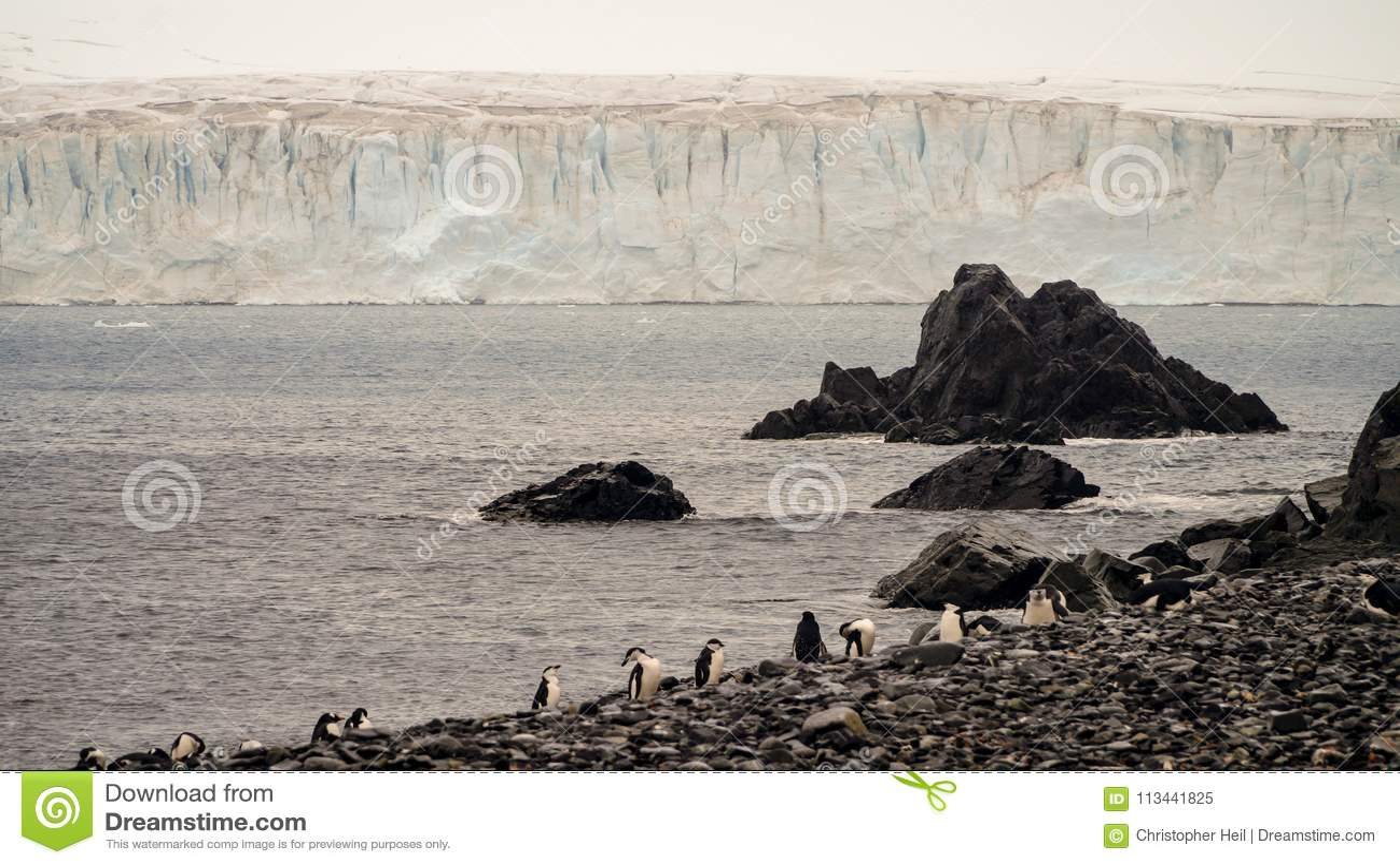 Enormer Eisberg der Chinstrap-Pinguin-Anzeige auf Halbmondinsel in der Antarktis
