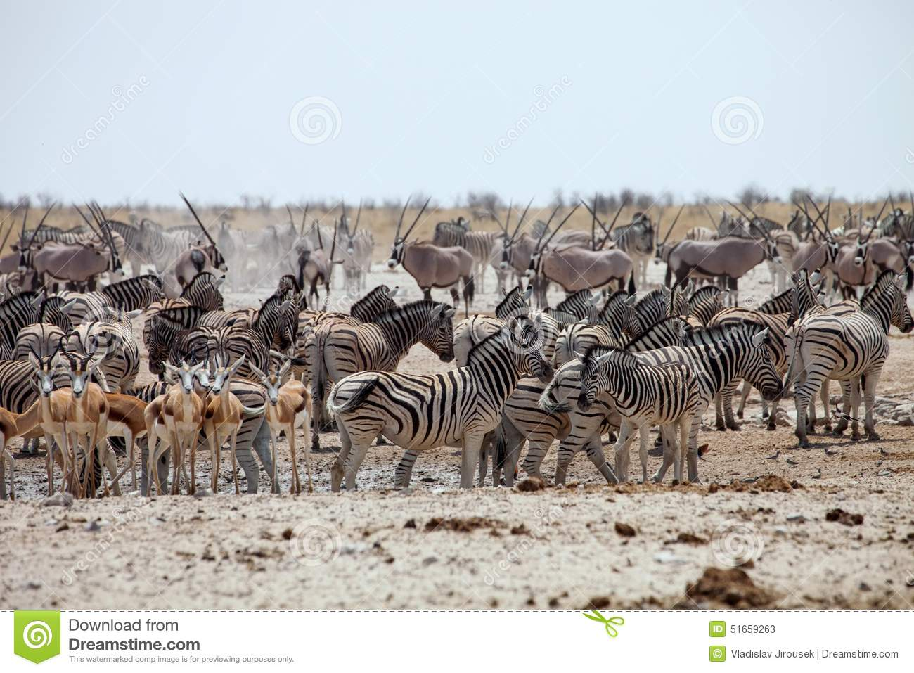 Enormous Number Of Animals At The Waterhole In The Etosha ...