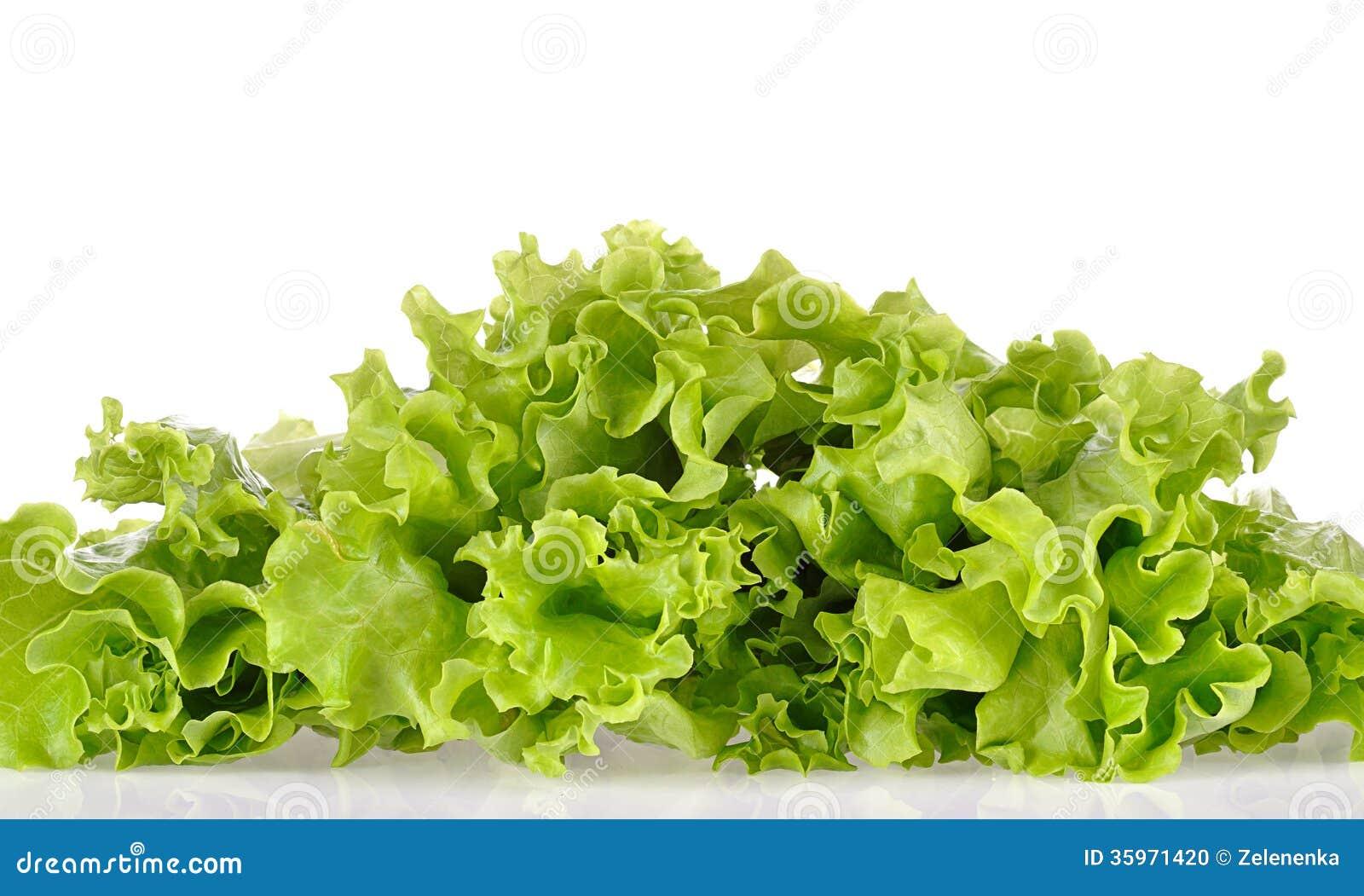 Ensalada verde aislada en un blanco