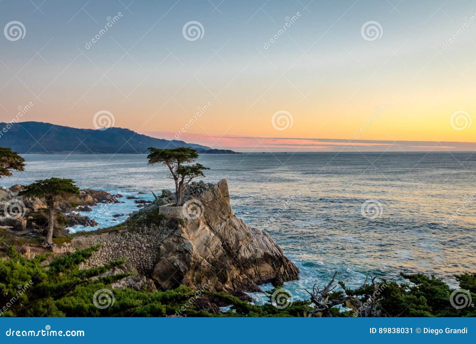 Ensam cypressträdsikt på solnedgången längs berömt 17 mil drev - Monterey, Kalifornien, USA
