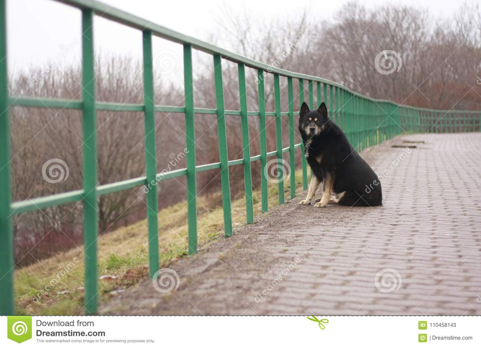 Ensam hund på staketet