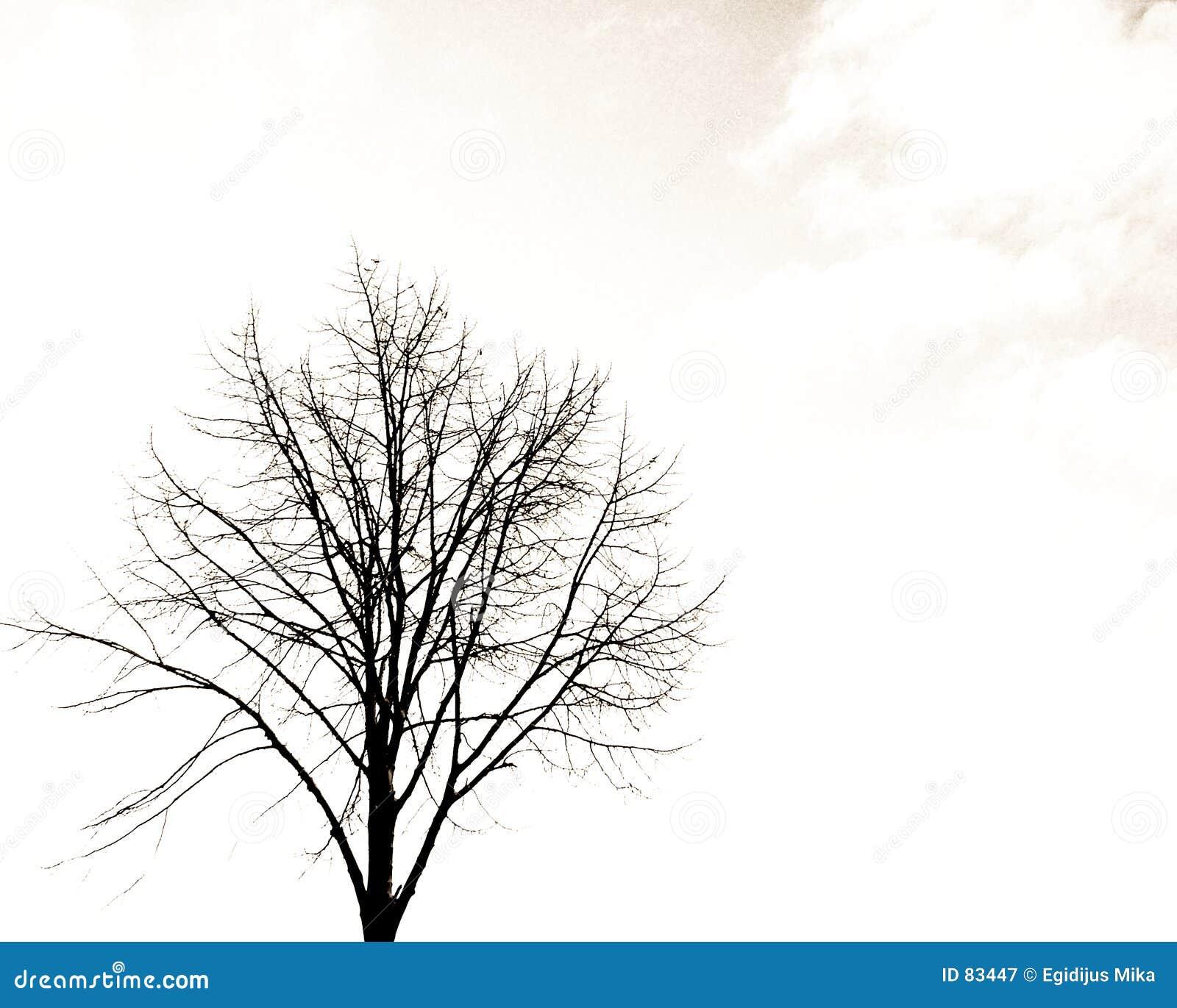 Ensam tree