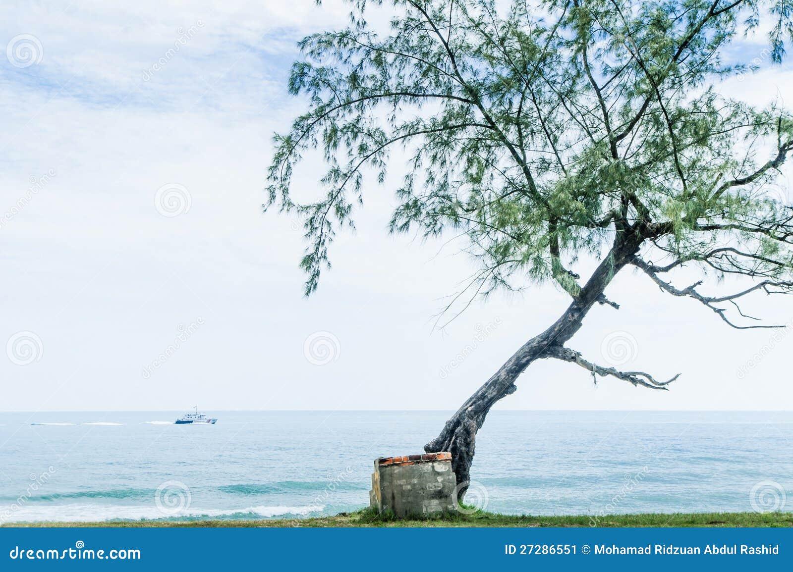 Ensam tree och trappa vid stranden