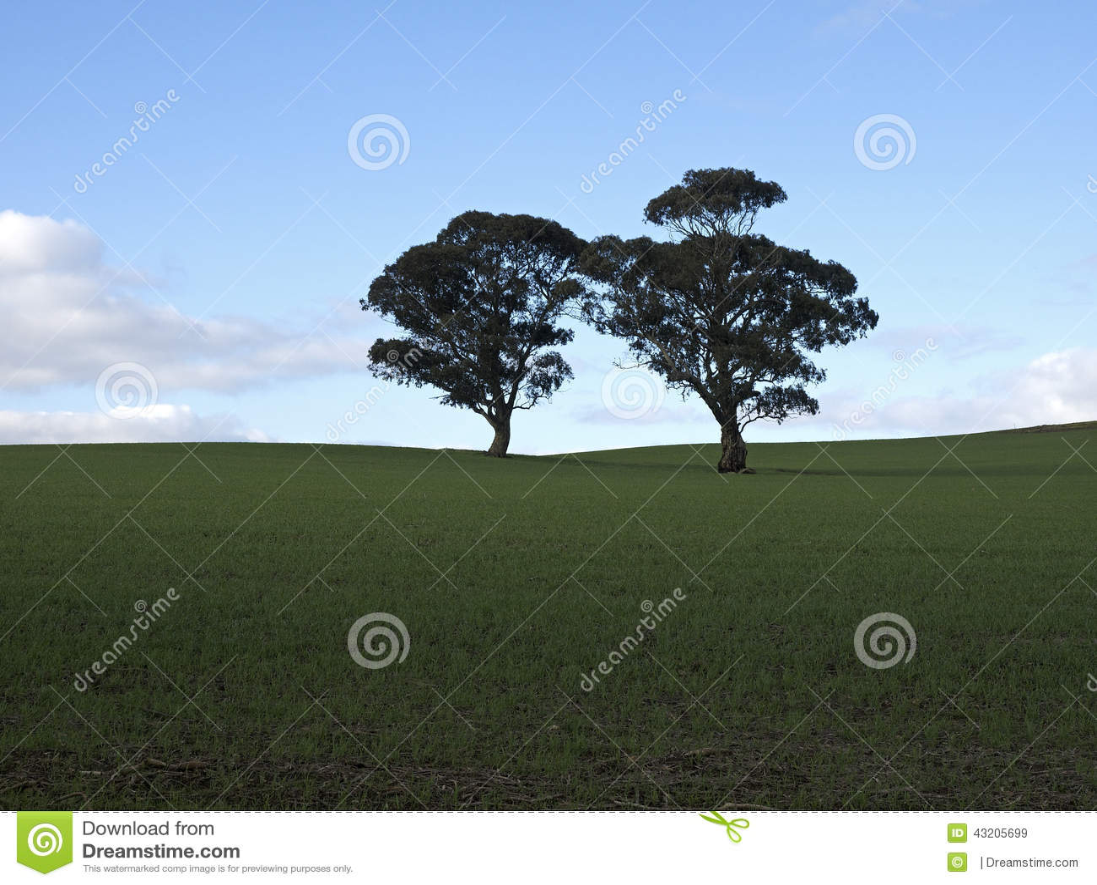 Download Ensamma trees två fotografering för bildbyråer. Bild av två - 43205699