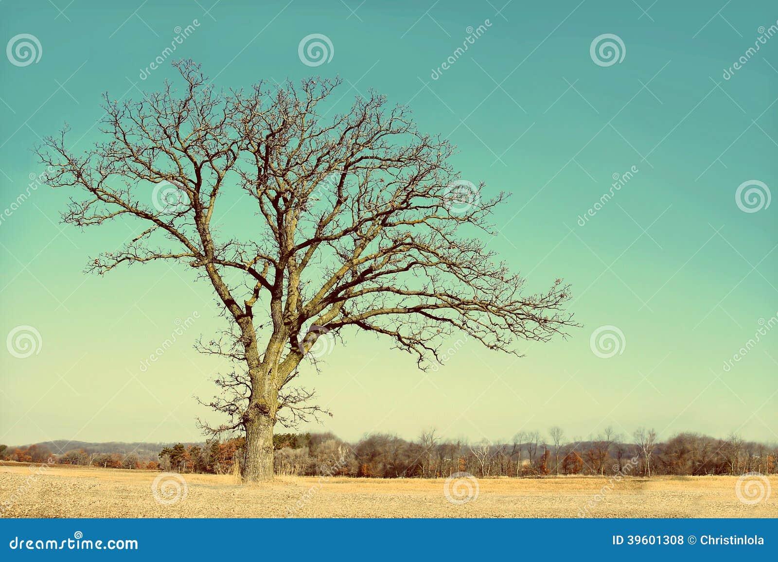 Ensamt kalt förgrena sig vinterträd i landet