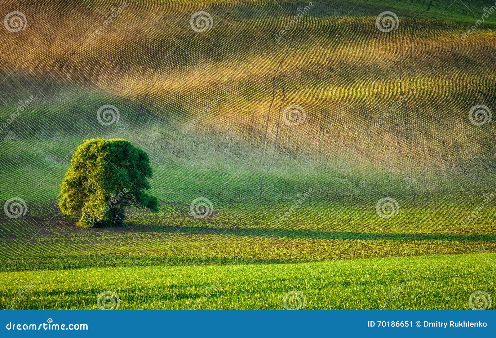 Ensamt träd i plöjt fält
