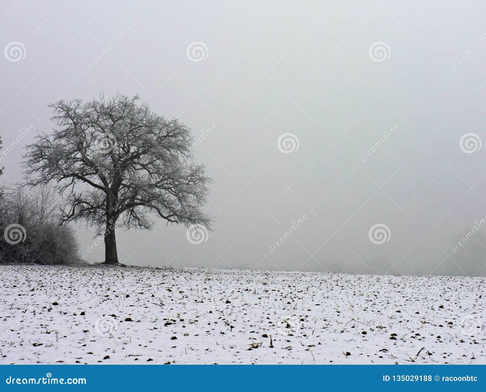 Ensamt träd i vinterdimma Dagg som glaseras på trät under en kall helg Taget i Hohenwettersbach, Tyskland