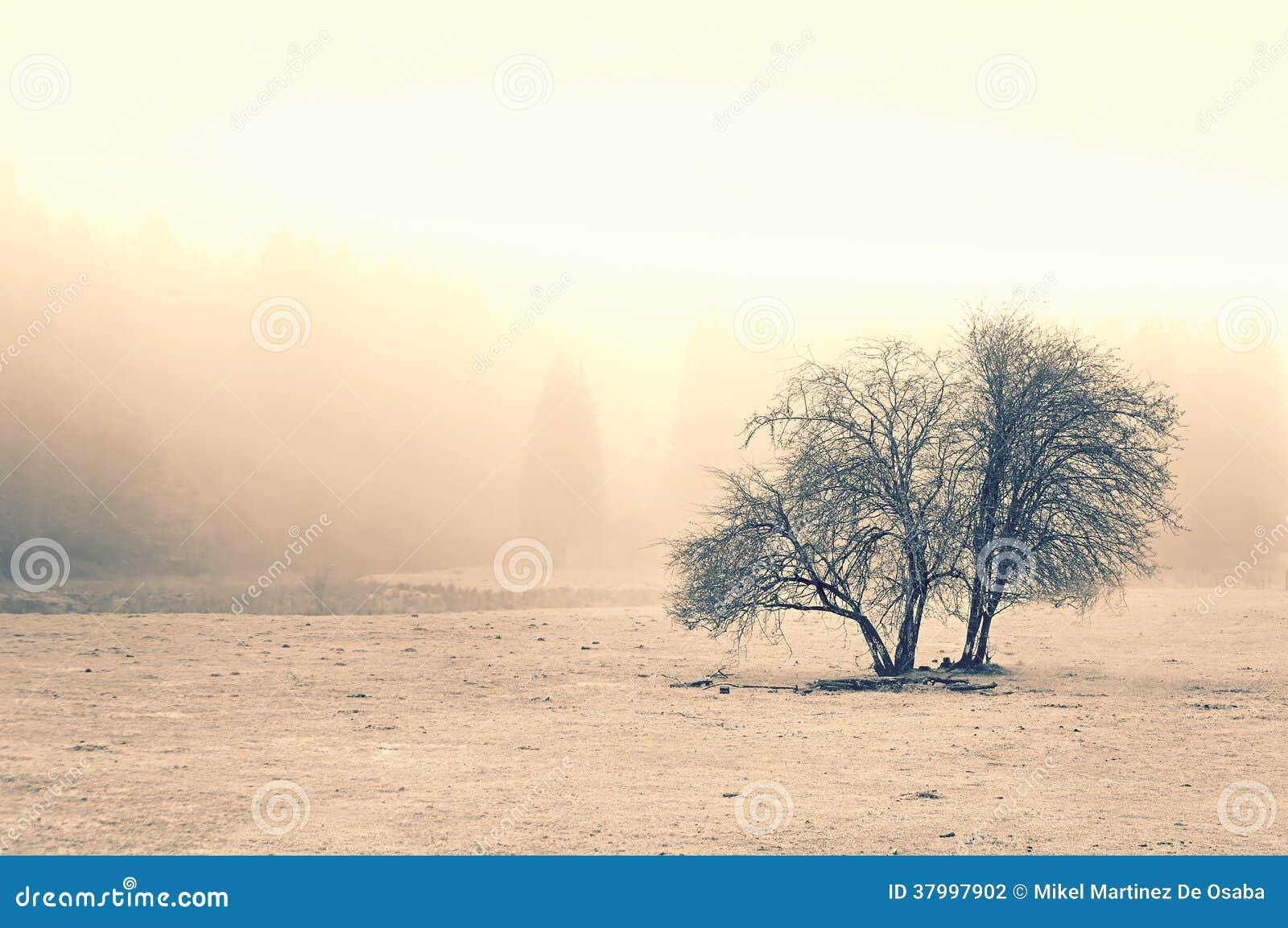 Ensamt träd med dimma