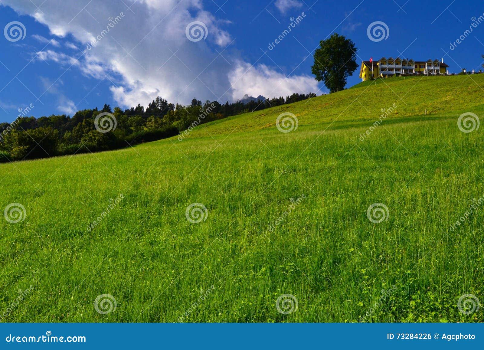 Ensamt träd och byggande överst av en grön kulle