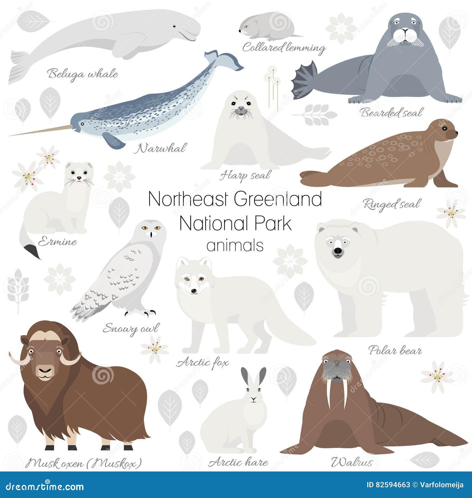 Ensemble arctique d animal Ours blanc blanc, narval, baleine, boeuf de musc, phoque, morse, renard arctique, hermine, lapin, lièv