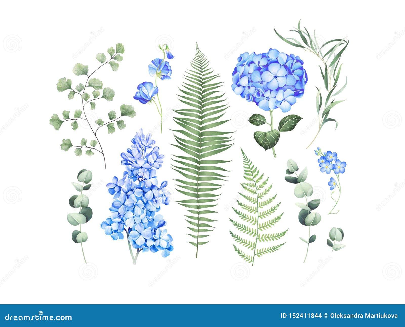 Ensemble botanique avec les branches d eucalyptus, la fougère et les fleurs bleues d isolement sur le fond blanc Illustration d a