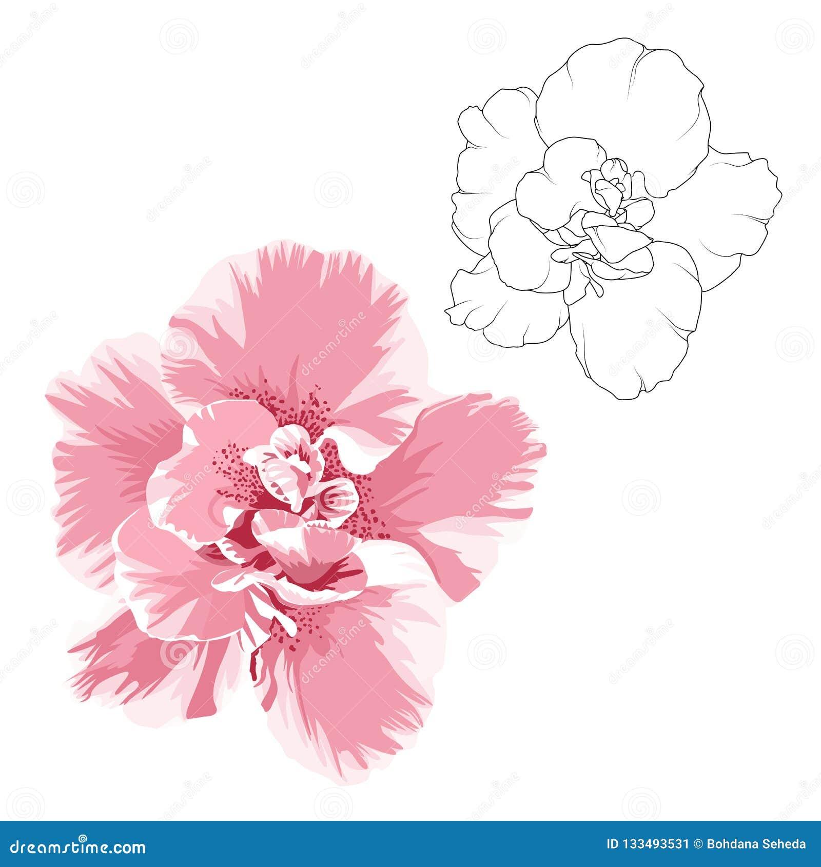 Ensemble Déléments De Conception De Fleur De Camelia Dessin