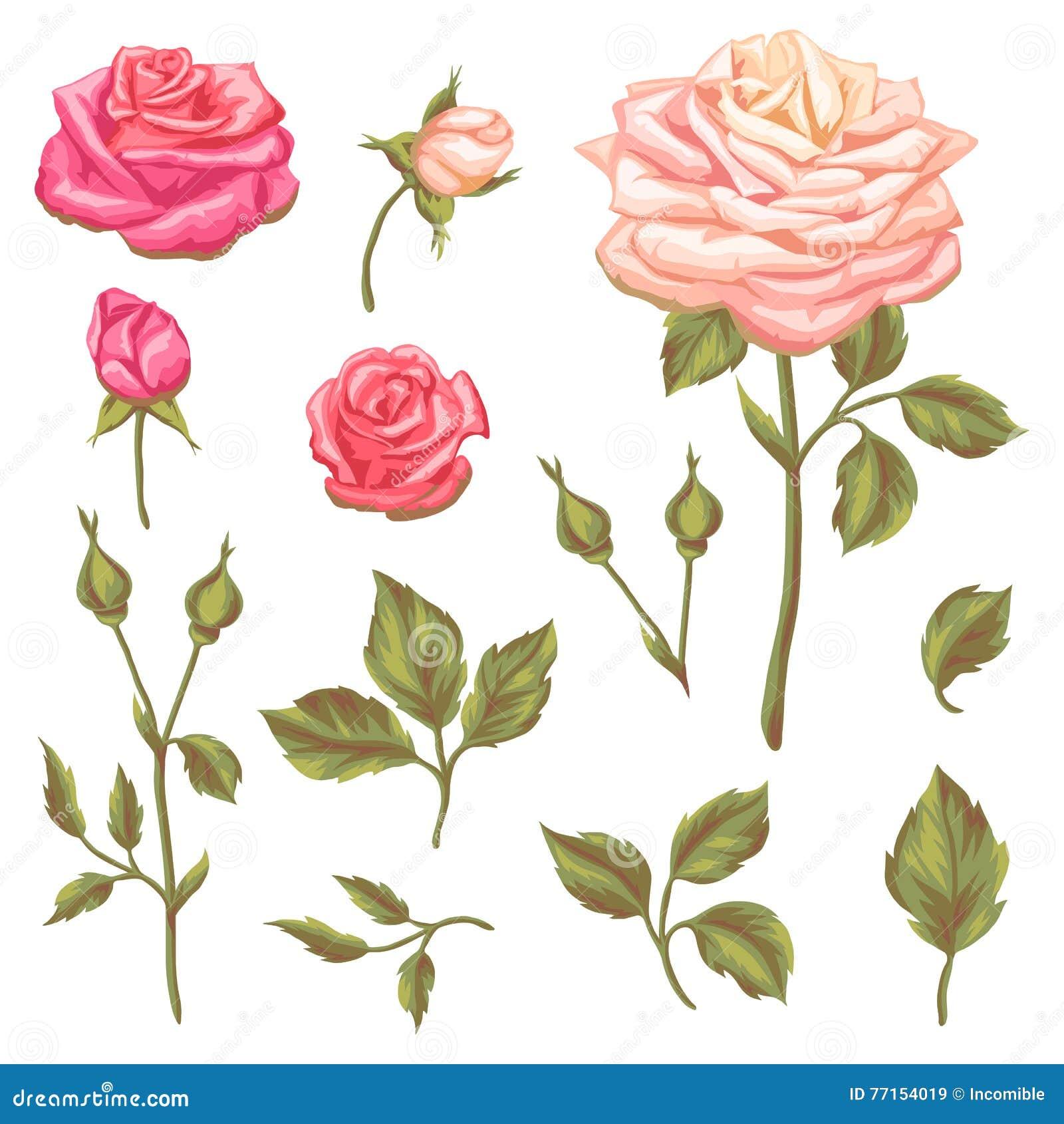 Ensemble d éléments floraux avec des roses de vintage Rétros fleurs décoratives Objets pour des invitations de mariage de décorat