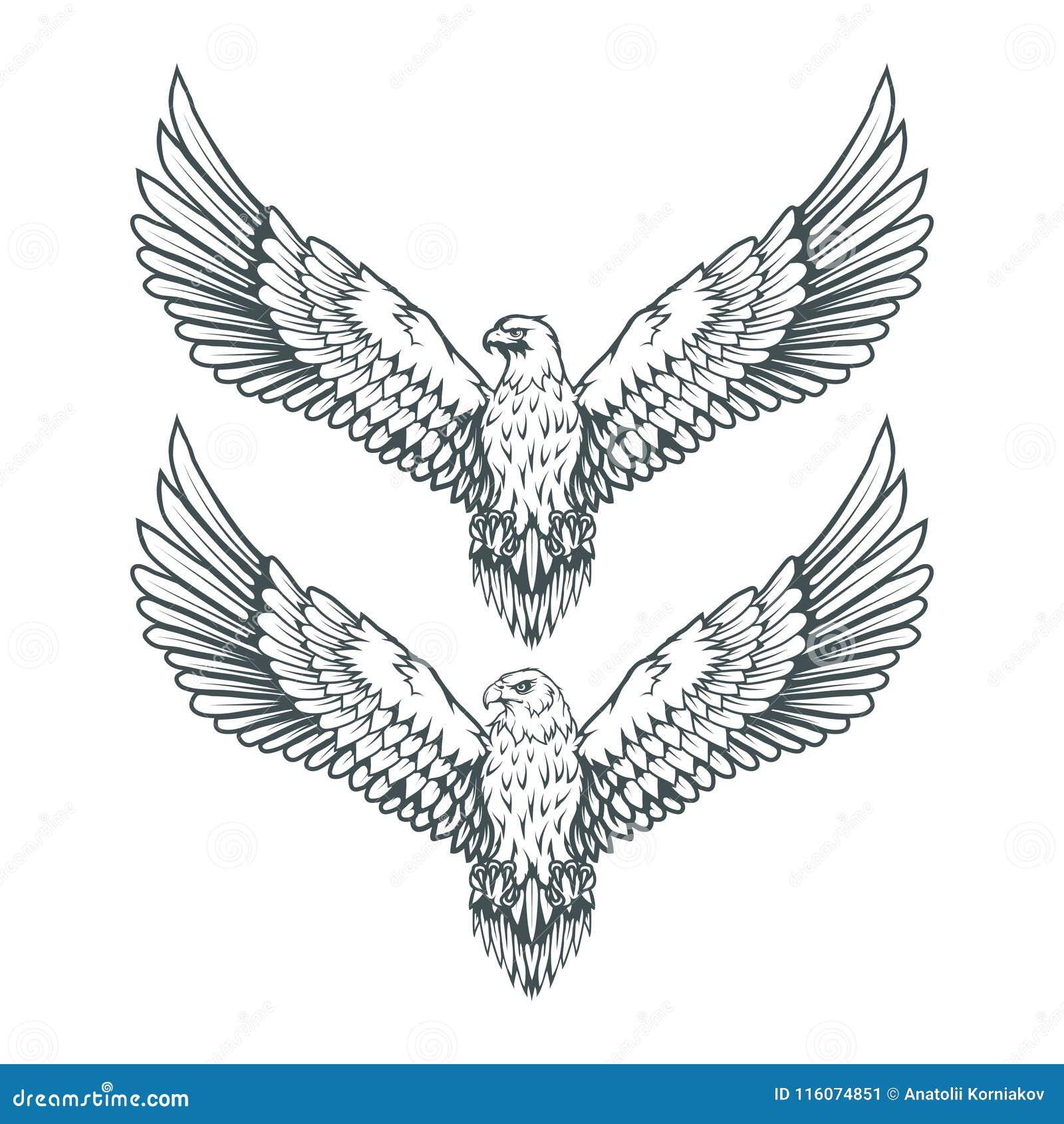 ensemble d 39 aigles logo d 39 aigle chauve dessin sauvage d. Black Bedroom Furniture Sets. Home Design Ideas