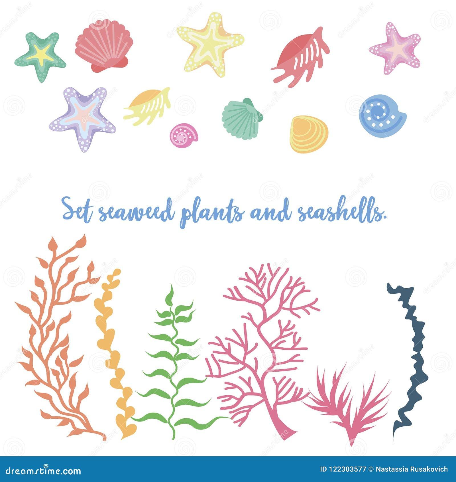 Ensemble d algue, de corail et de coquilles