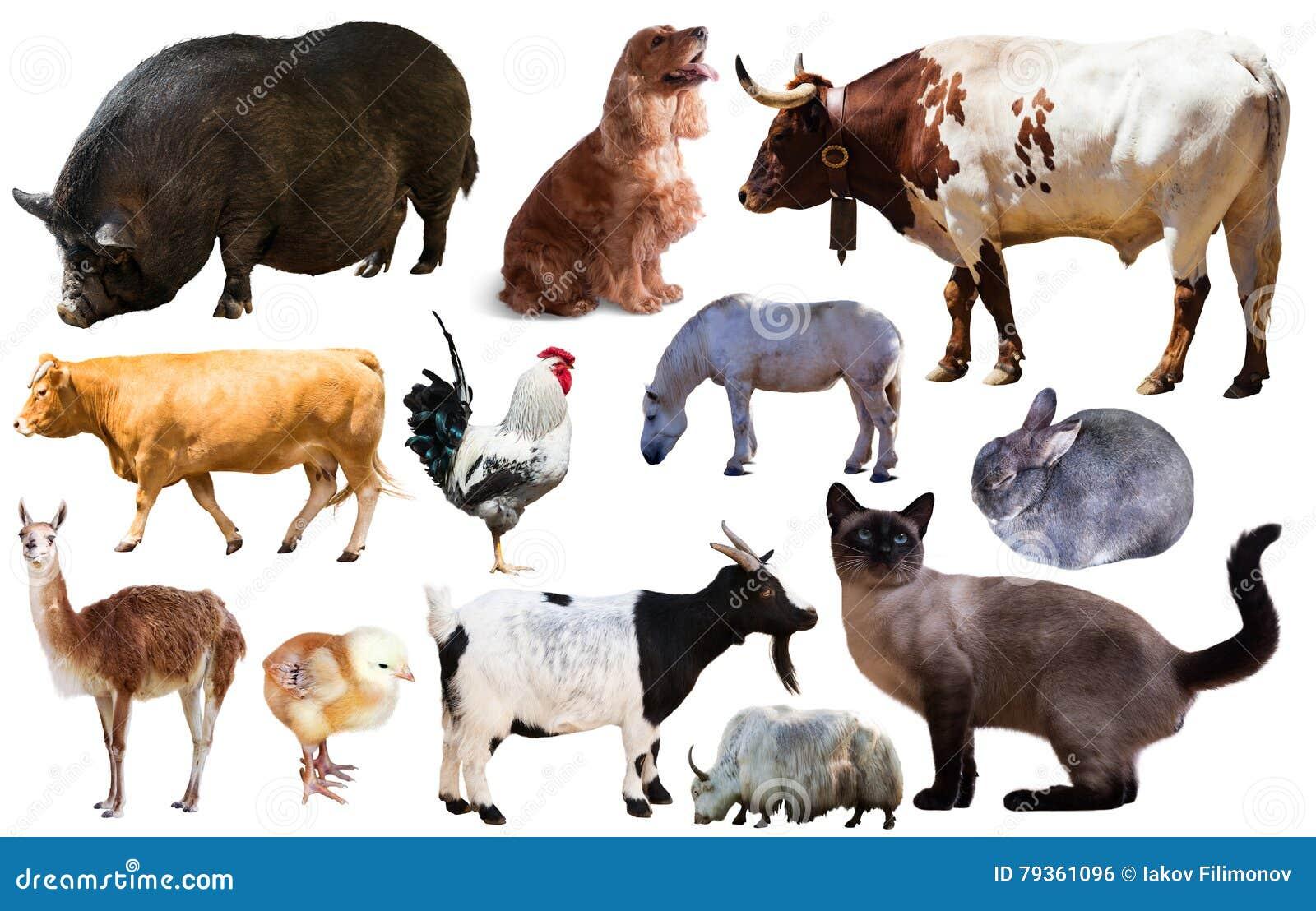 Ensemble d animaux de ferme