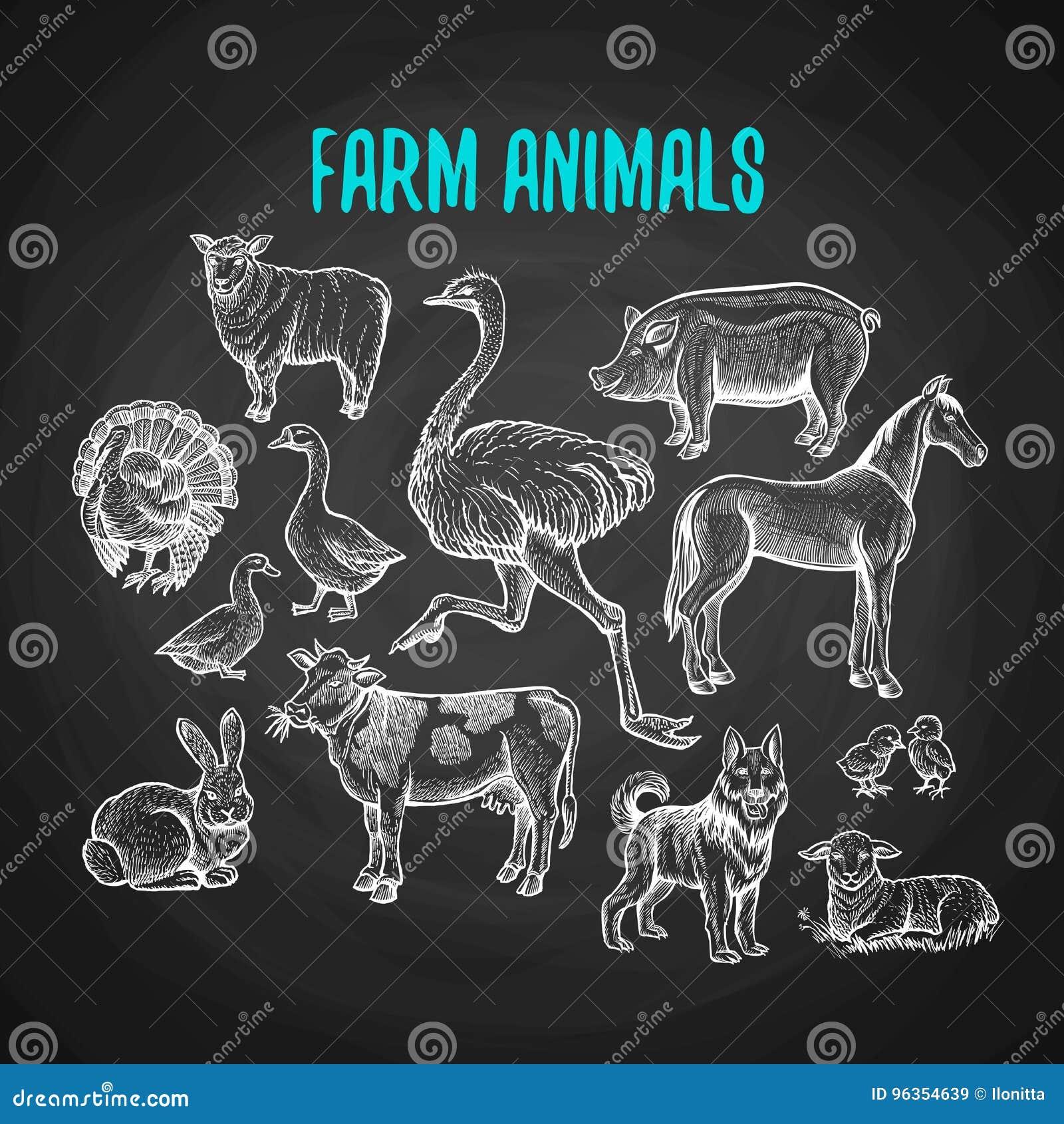 Ensemble d animaux de ferme dans le style de craie sur le tableau noir