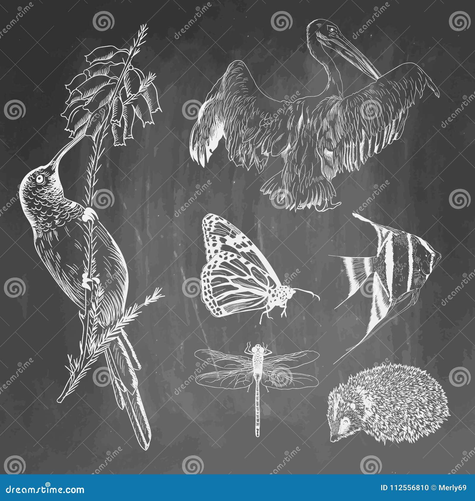 Ensemble d animaux sur le fond de tableau Colibri, pélican, papillon, poisson, hérisson, croquis de libellule Vecteur