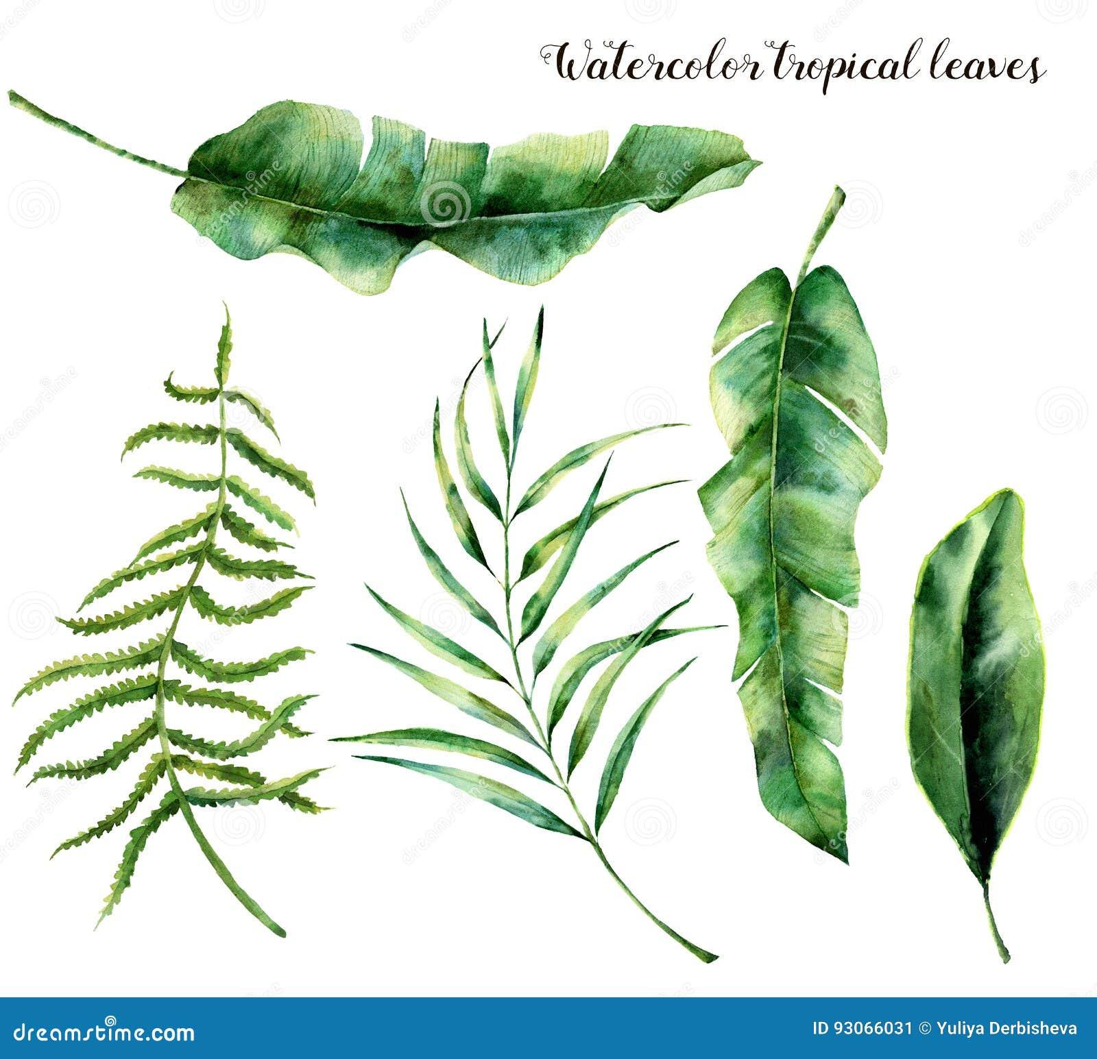 Ensemble d aquarelle avec les feuilles tropicales Branche, fougère et feuille peintes à la main de paume de magnolia Usine tropic