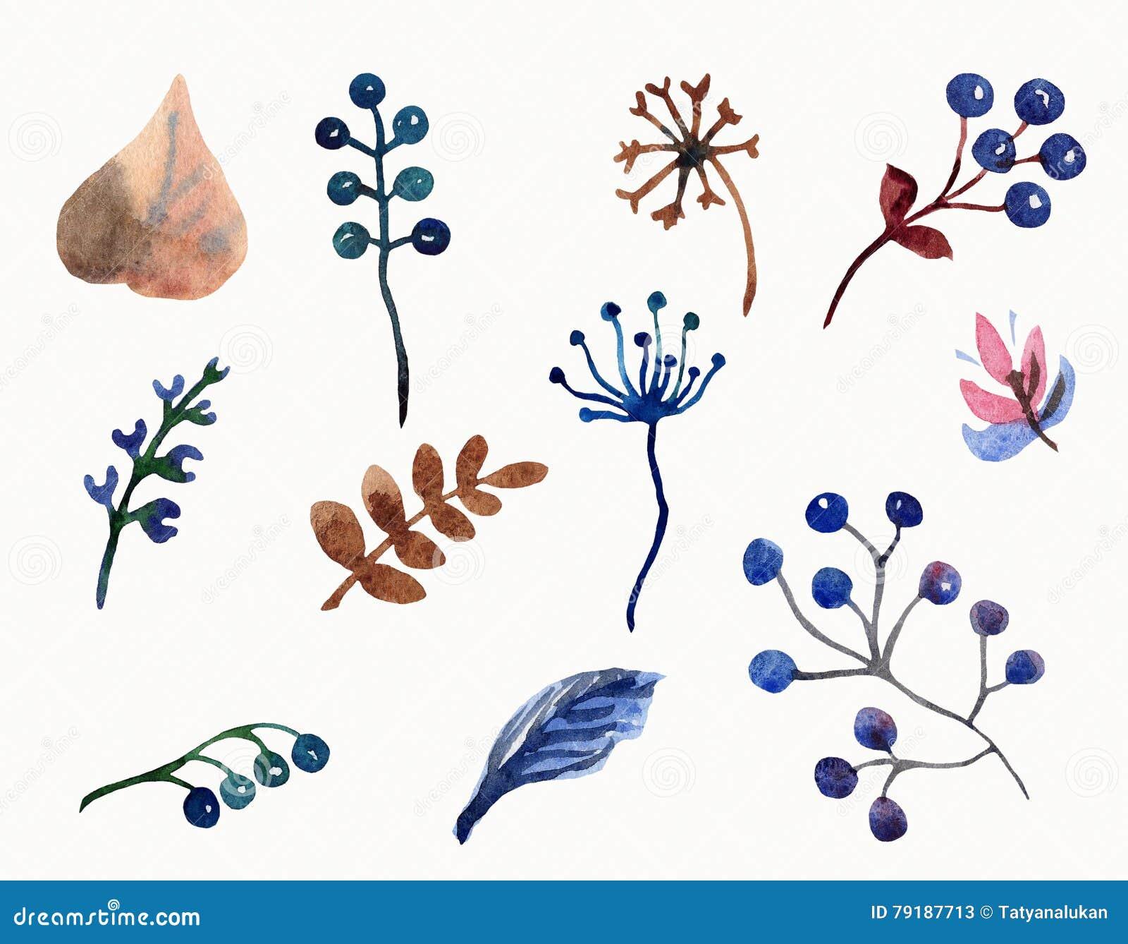 Ensemble d aquarelle de feuilles, de branches et de baies de fleurs