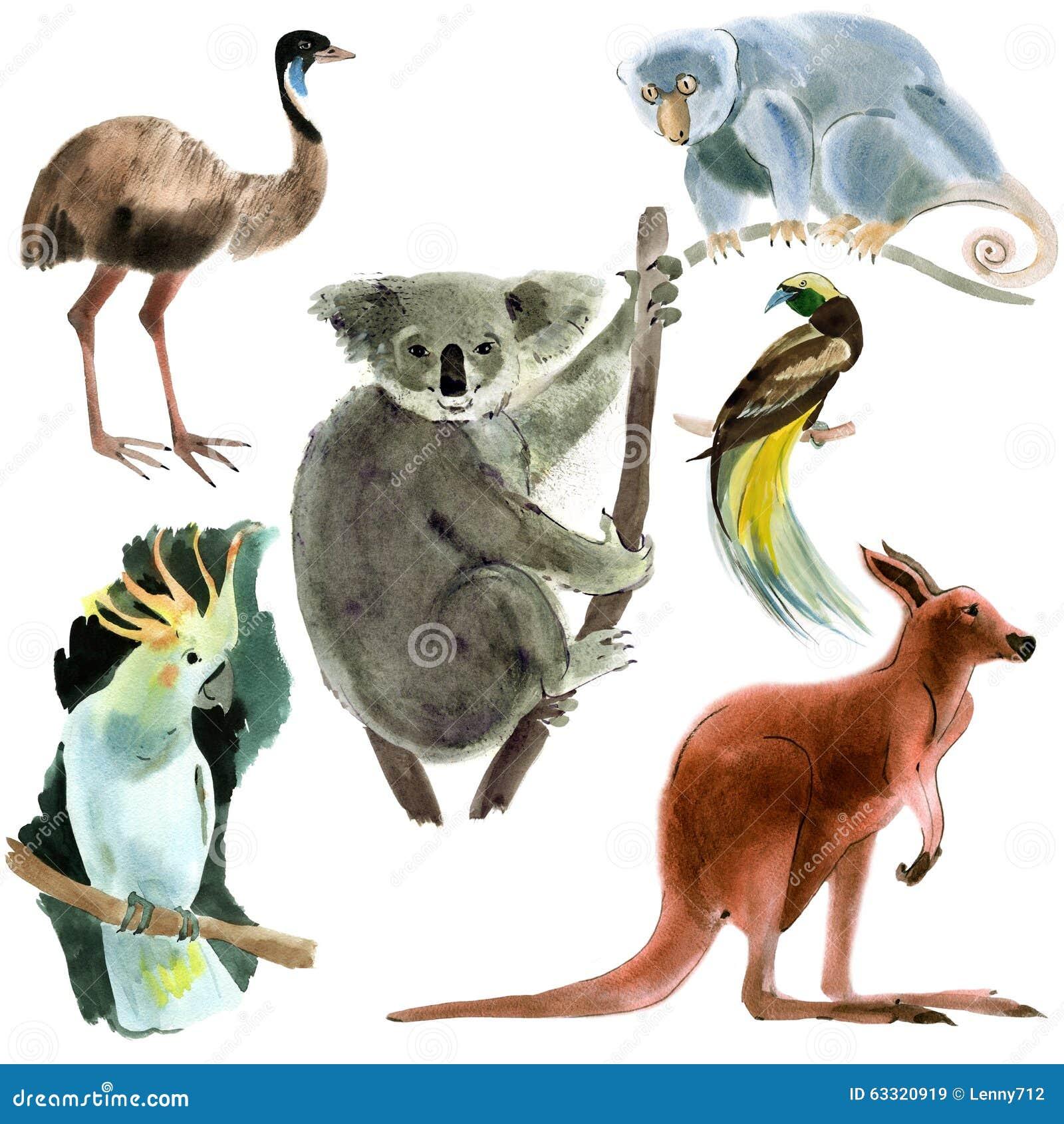 Ensemble d Australie d animaux Illustration d aquarelle à l arrière-plan blanc