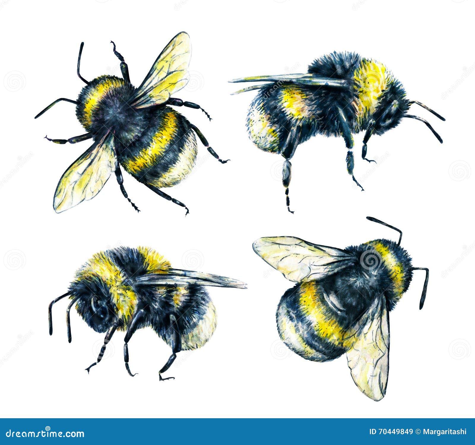 Ensemble de bourdons sur un fond blanc Retrait d aquarelle Art d insectes Travail manuel