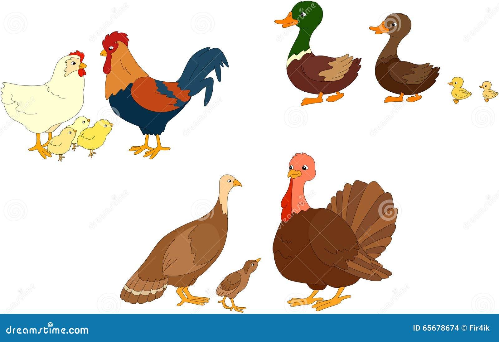 Ensemble de canard caneton canard coq poule poussins - Illustration canard ...