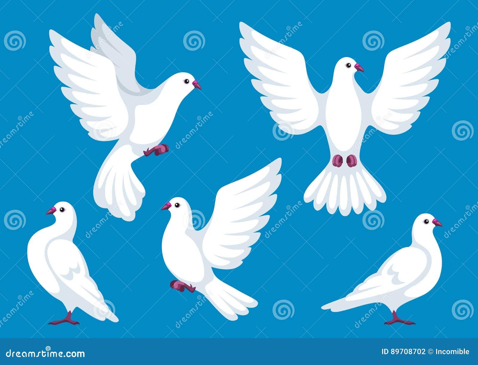 Ensemble de cinq colombes blanches Beaux foi de pigeons et symbole d amour