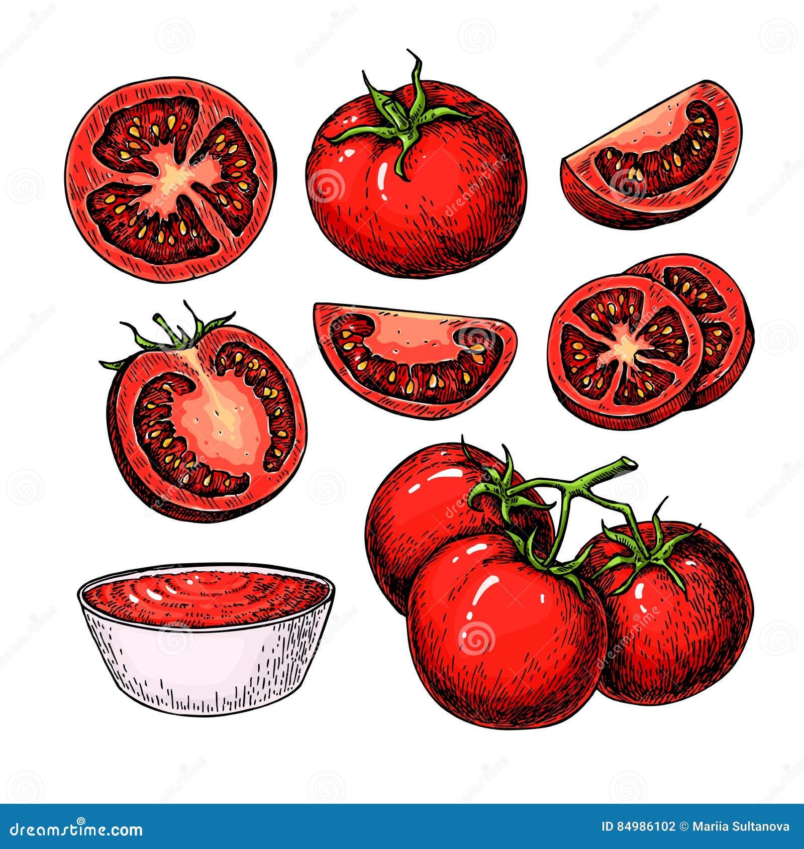 De dessin tomate stock illustrations vecteurs clipart 17 862 stock illustrations - Tomate dessin ...